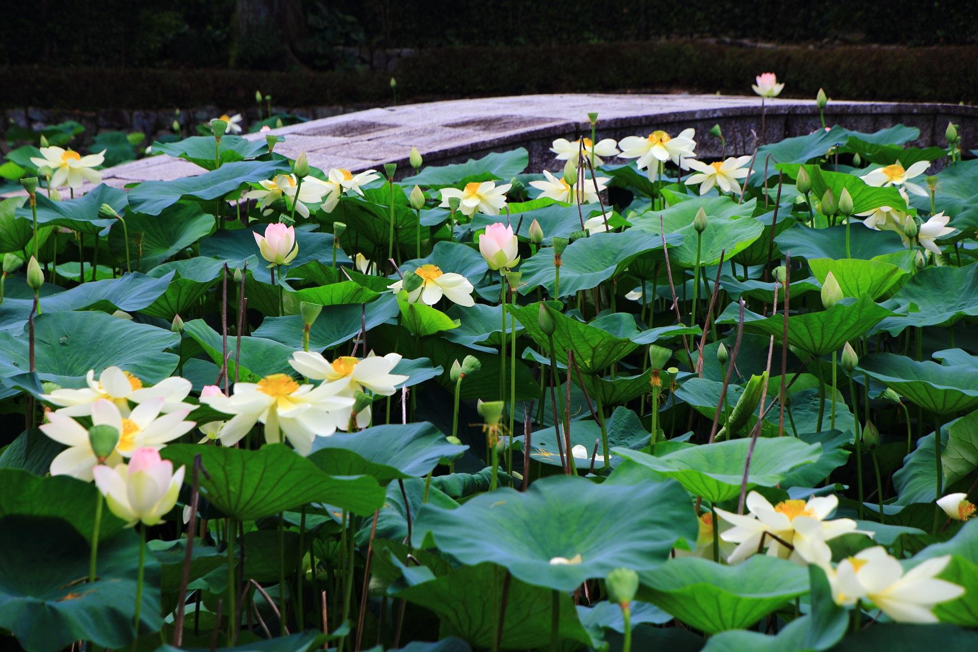 蓮の隠れた名所の東福寺
