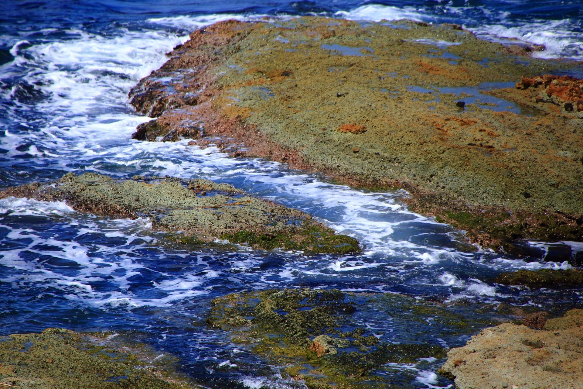 生物や地質学の研究対象となる京丹後の五色浜