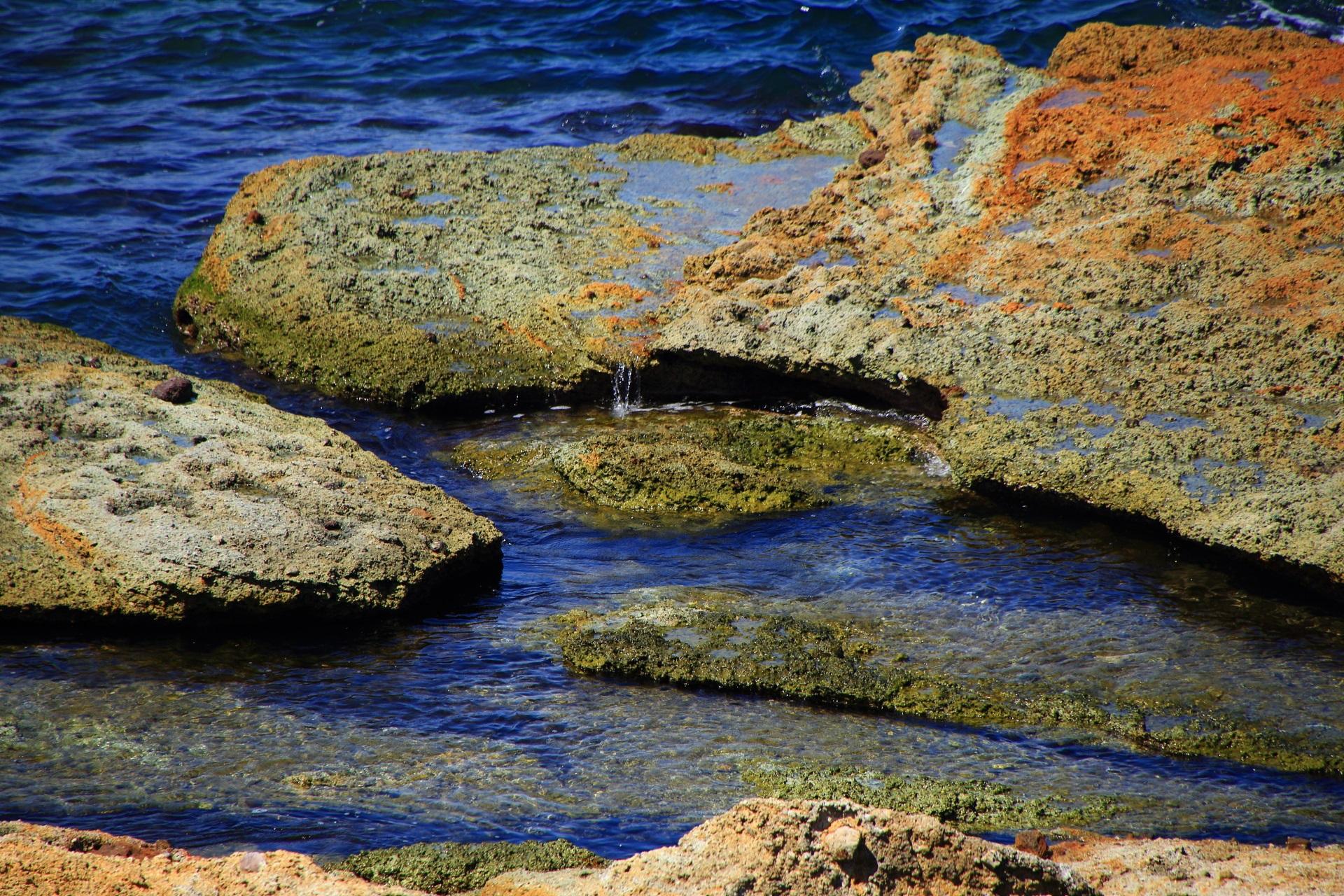 いろんな生物が生息する五色浜