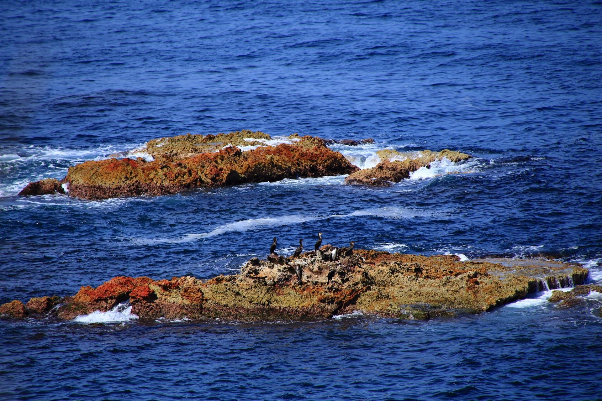 鳥が休憩する京丹後の海の岩場