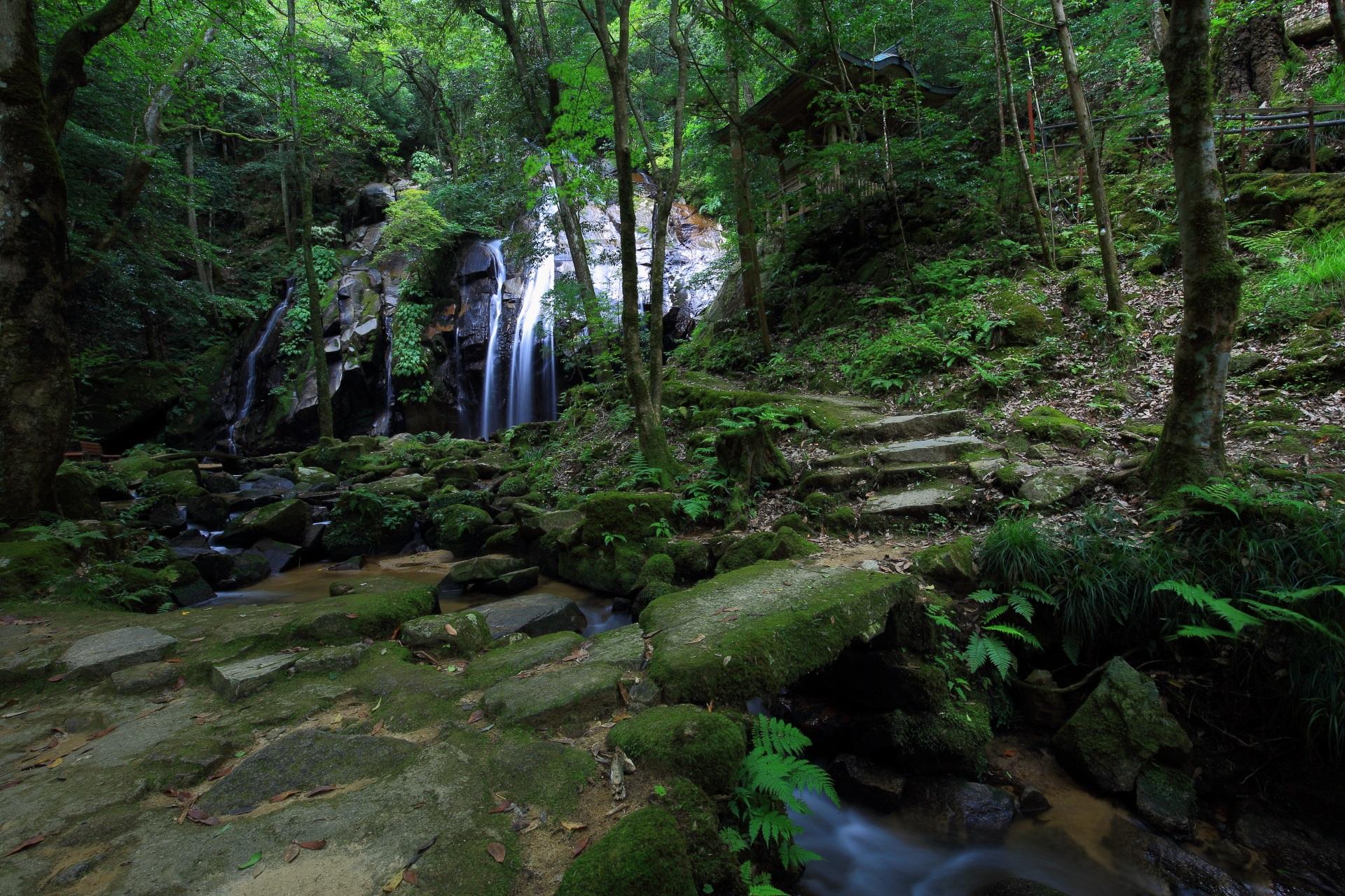 緑につつまれた金引の滝