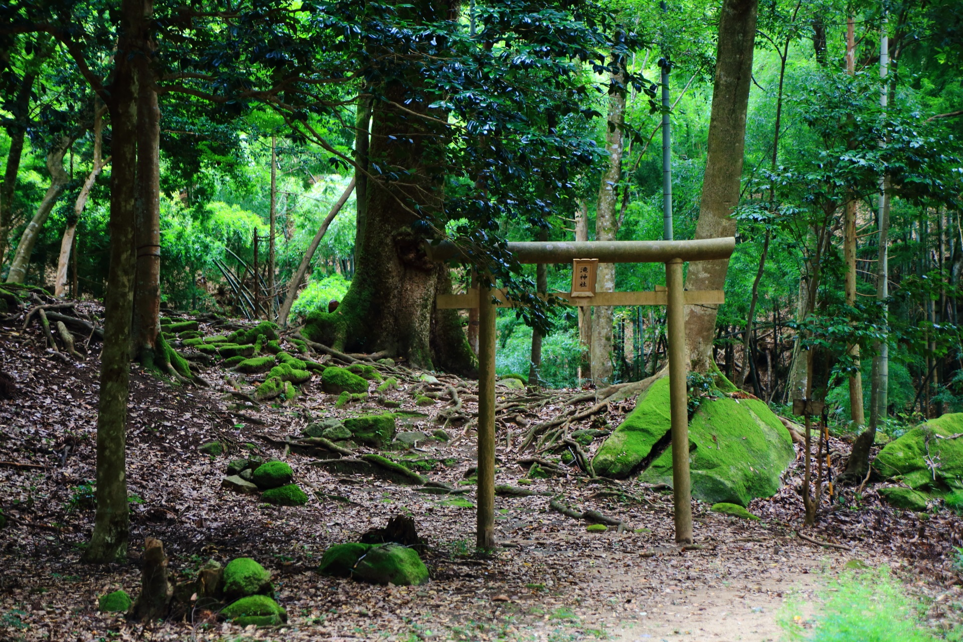 滝神社の鳥居