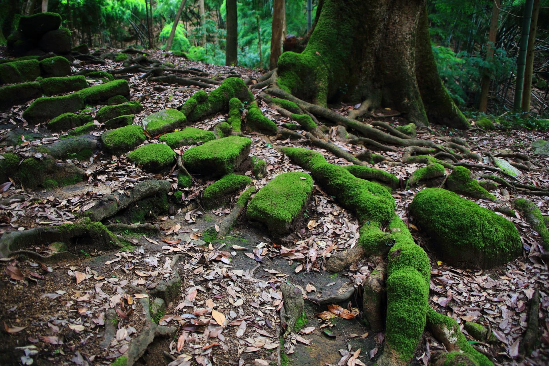 滝神社付近の綺麗な苔