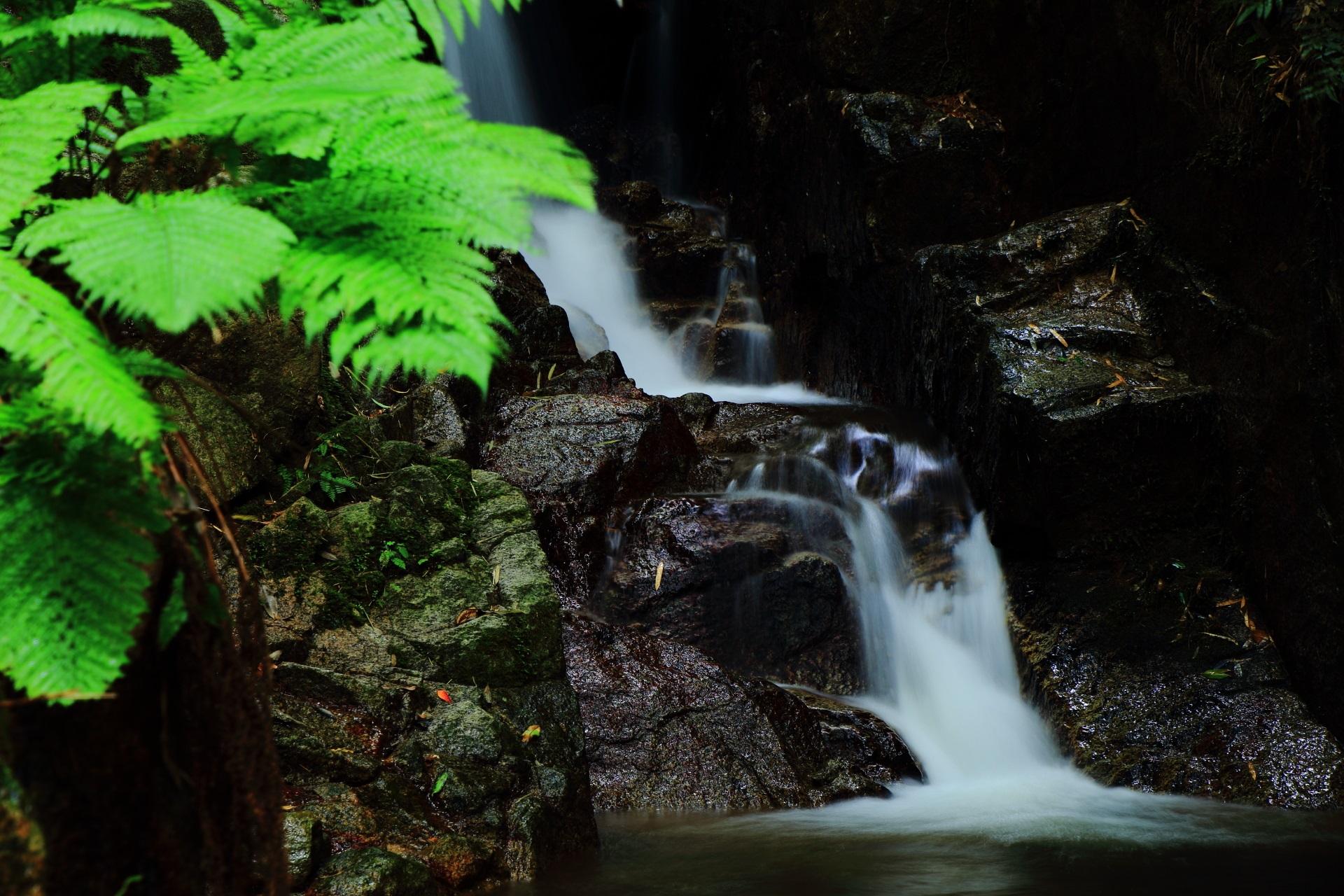 美しい水の流れと綺麗な緑のシダ