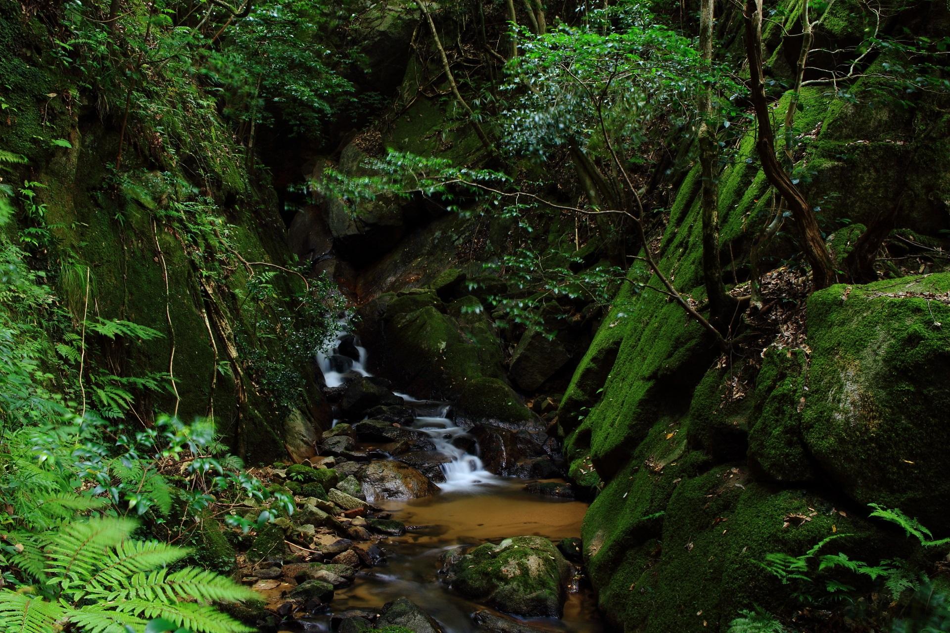 金引の滝の下流の川