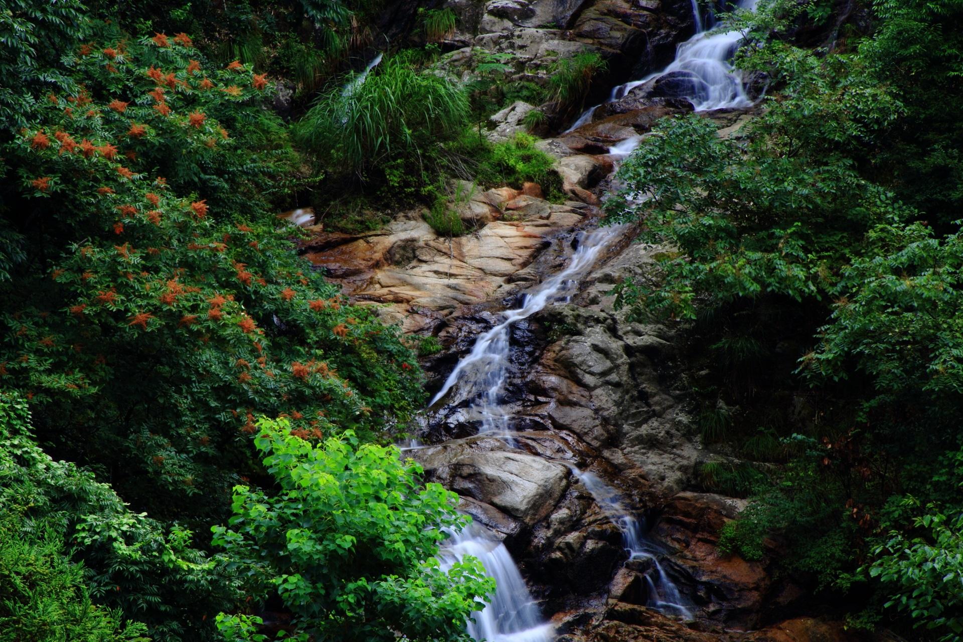 今福の滝の美しい緑と岩と水の流れ