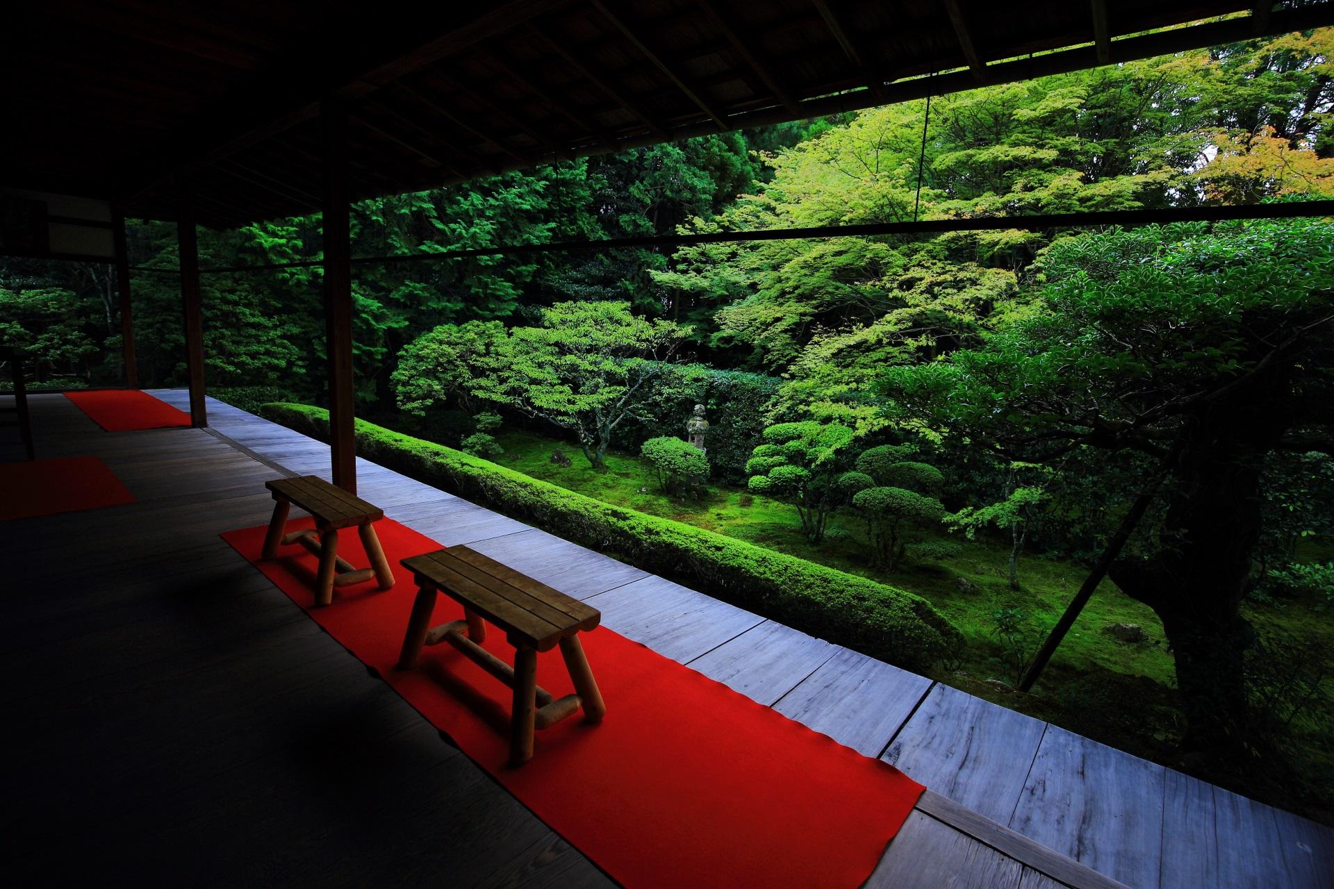 桂春院 庭園 美しい緑と風情ある彩り