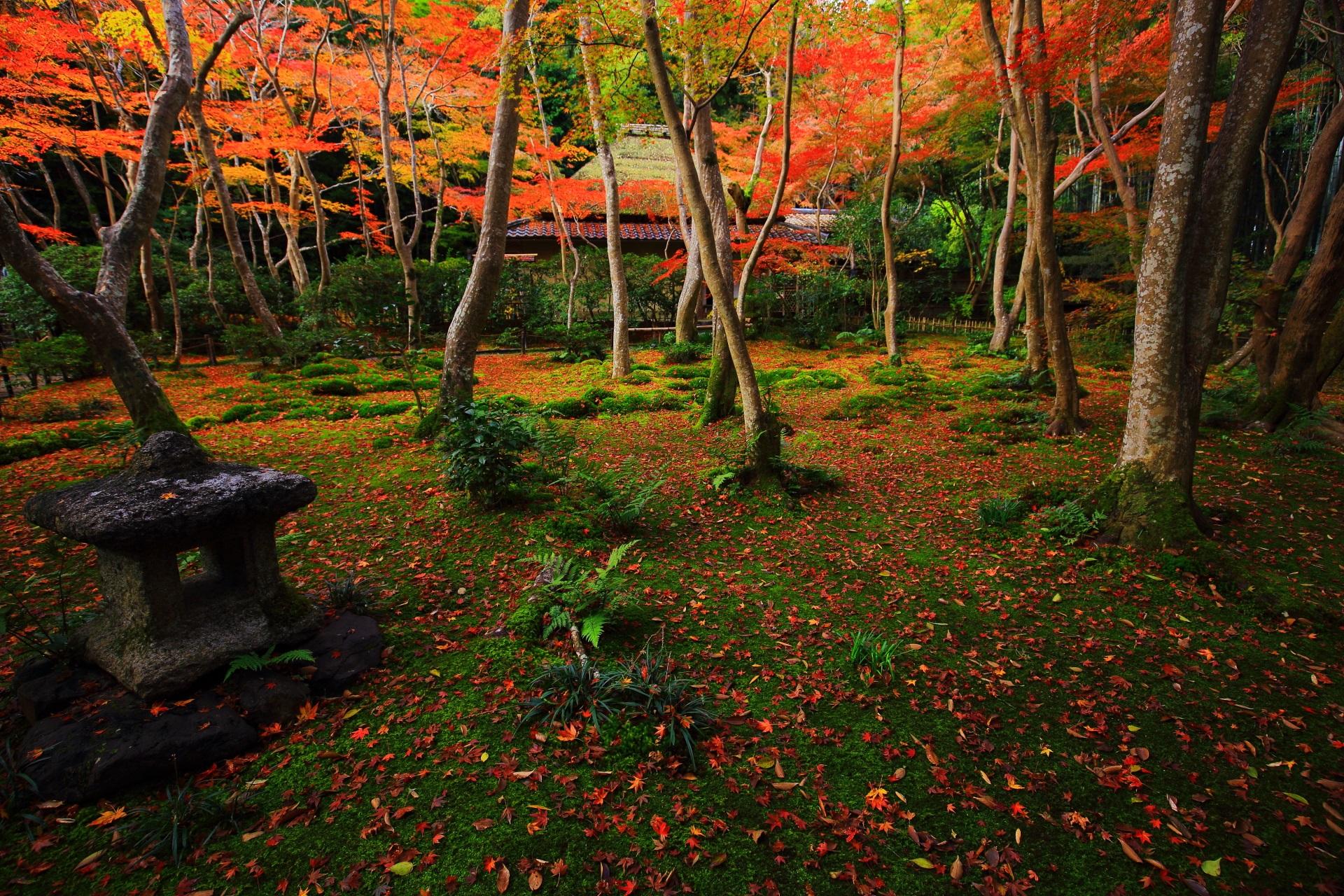 祇王寺 紅葉 苔庭の秋の彩りと絶品の散りもみじ
