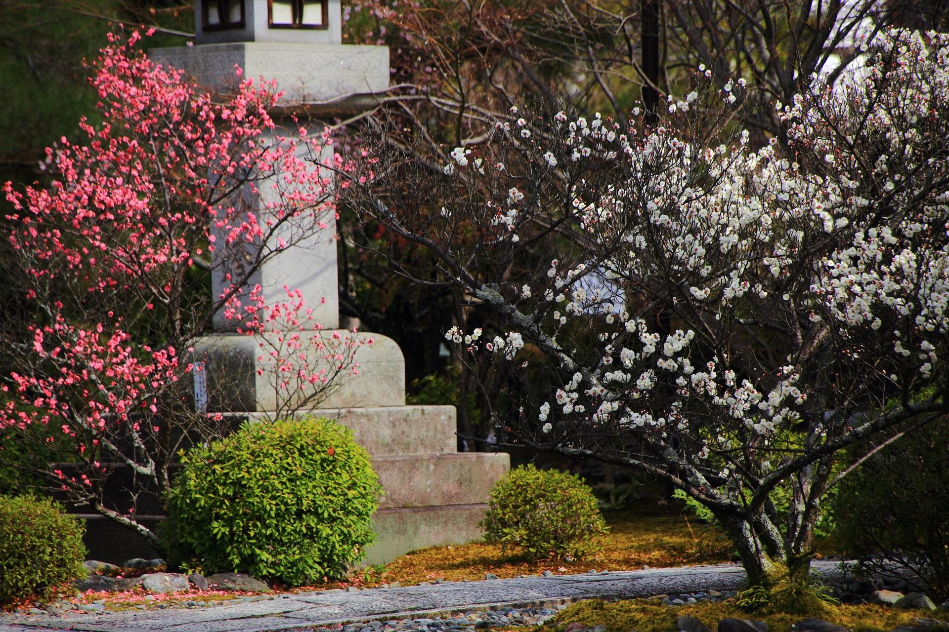 風情ある蟷螂を華やかな春色につつむ梅の花
