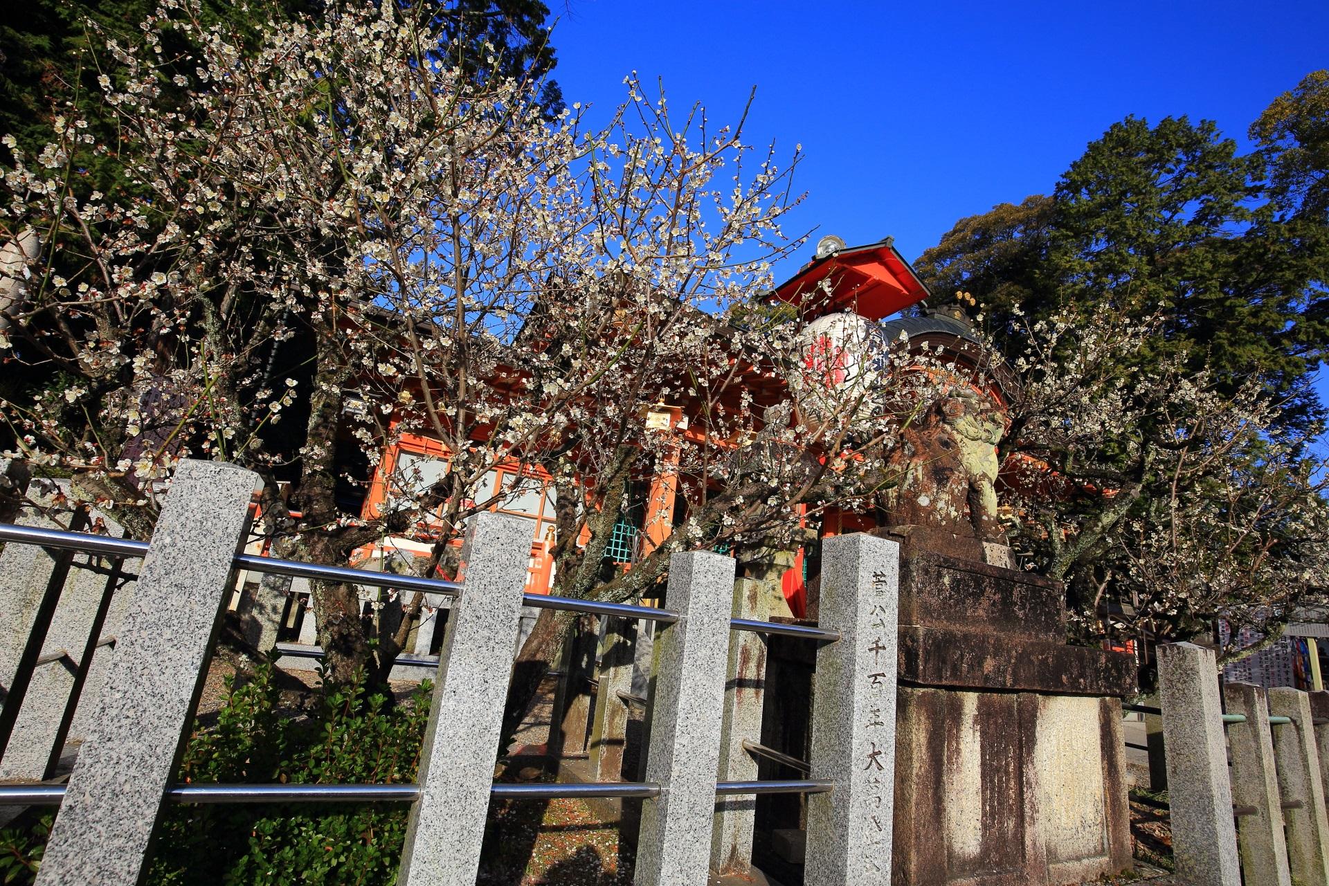 控えめに咲く本殿に向かって左側の梅