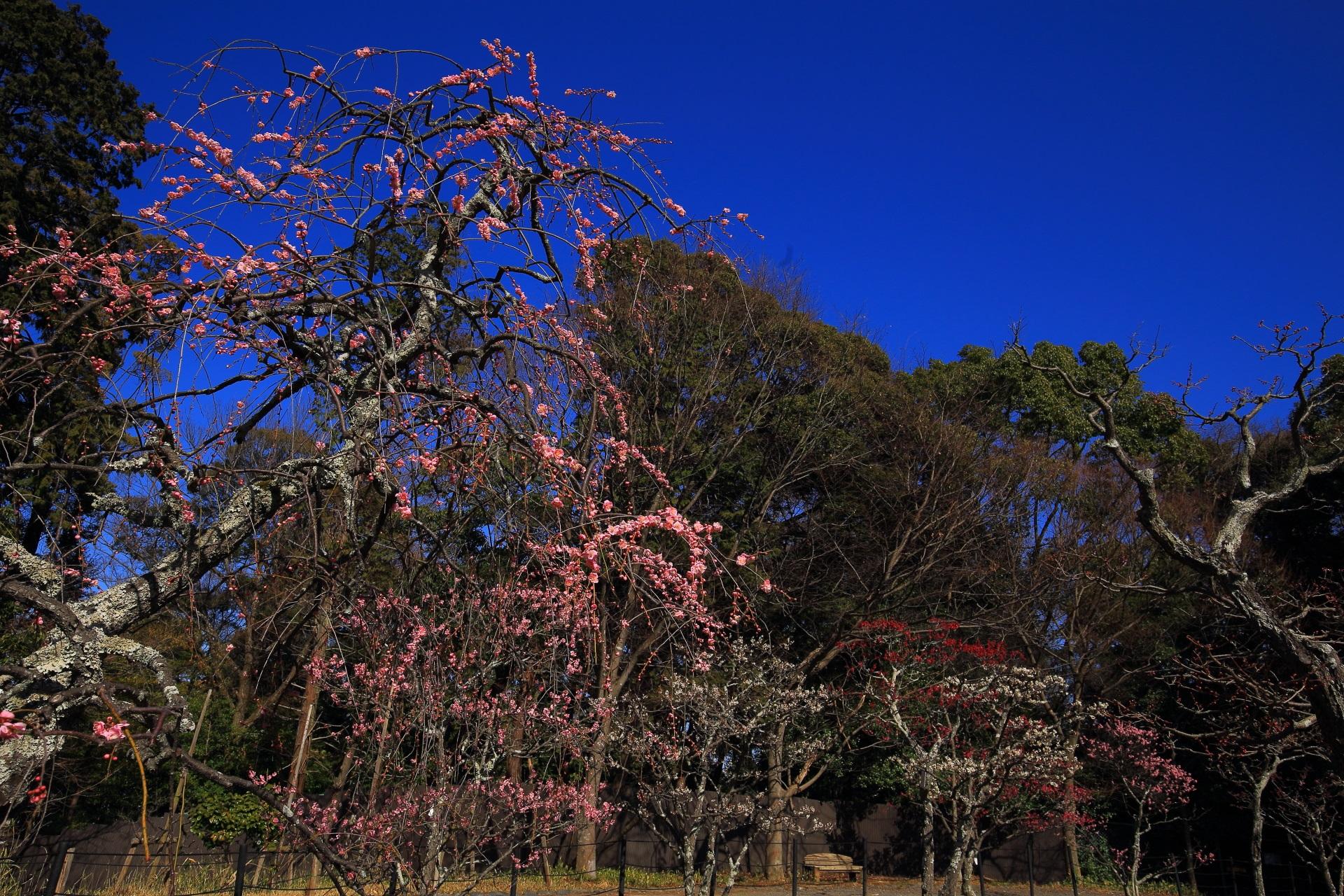 多種多様な梅が植えられている梅林