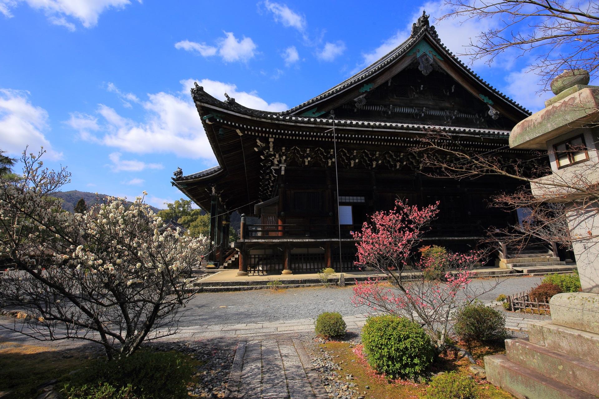 清涼寺の阿弥陀堂側から眺めた雄大な本堂と紅白の梅