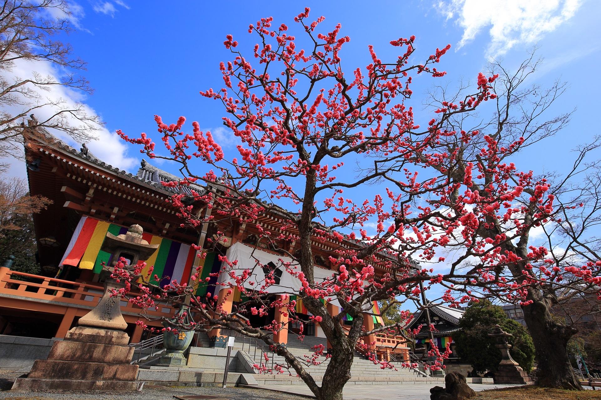 華やかに咲き誇る梅の名所