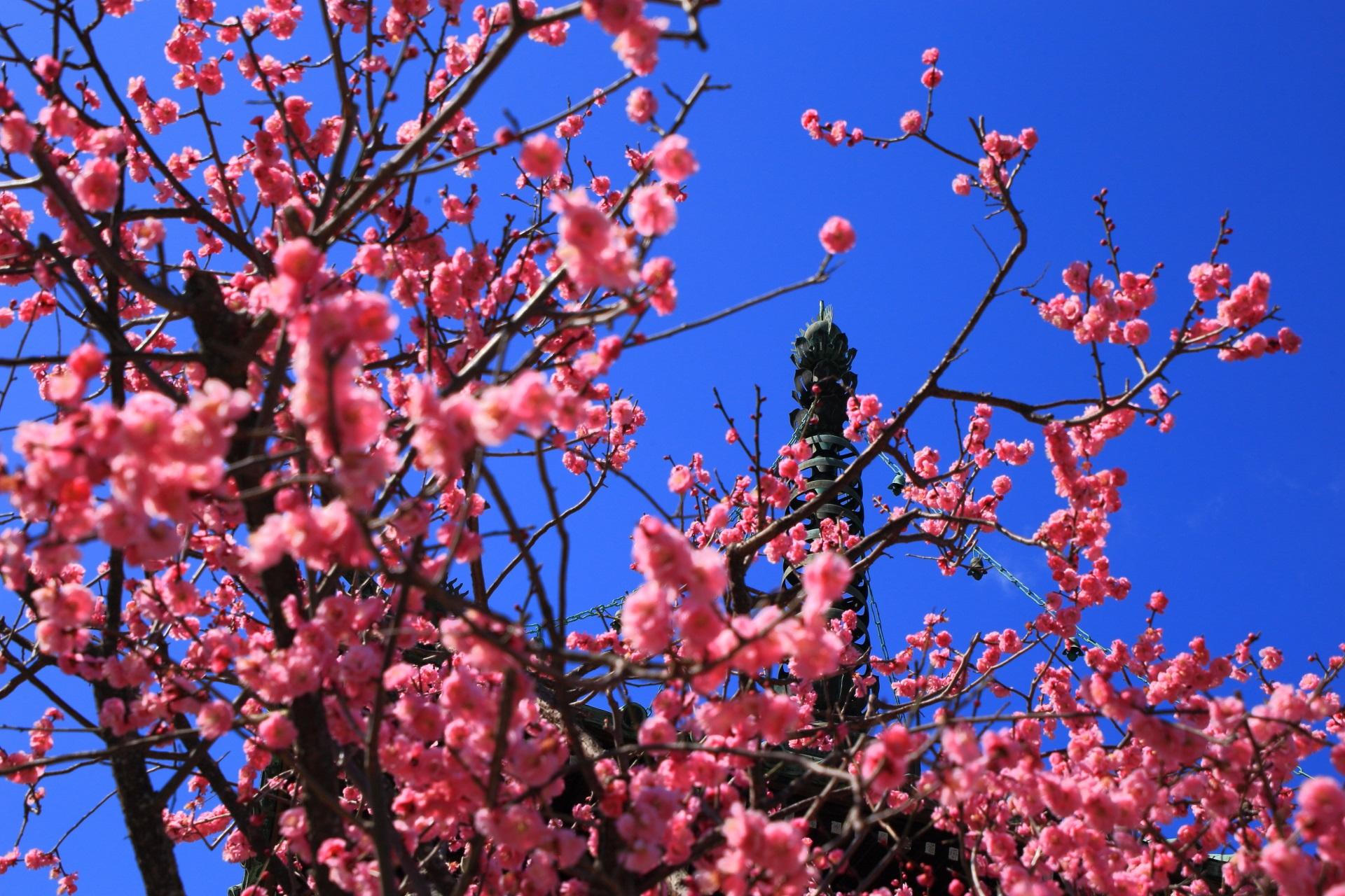 思いがけない方向にカクカクと伸びていく芸術的な梅の枝