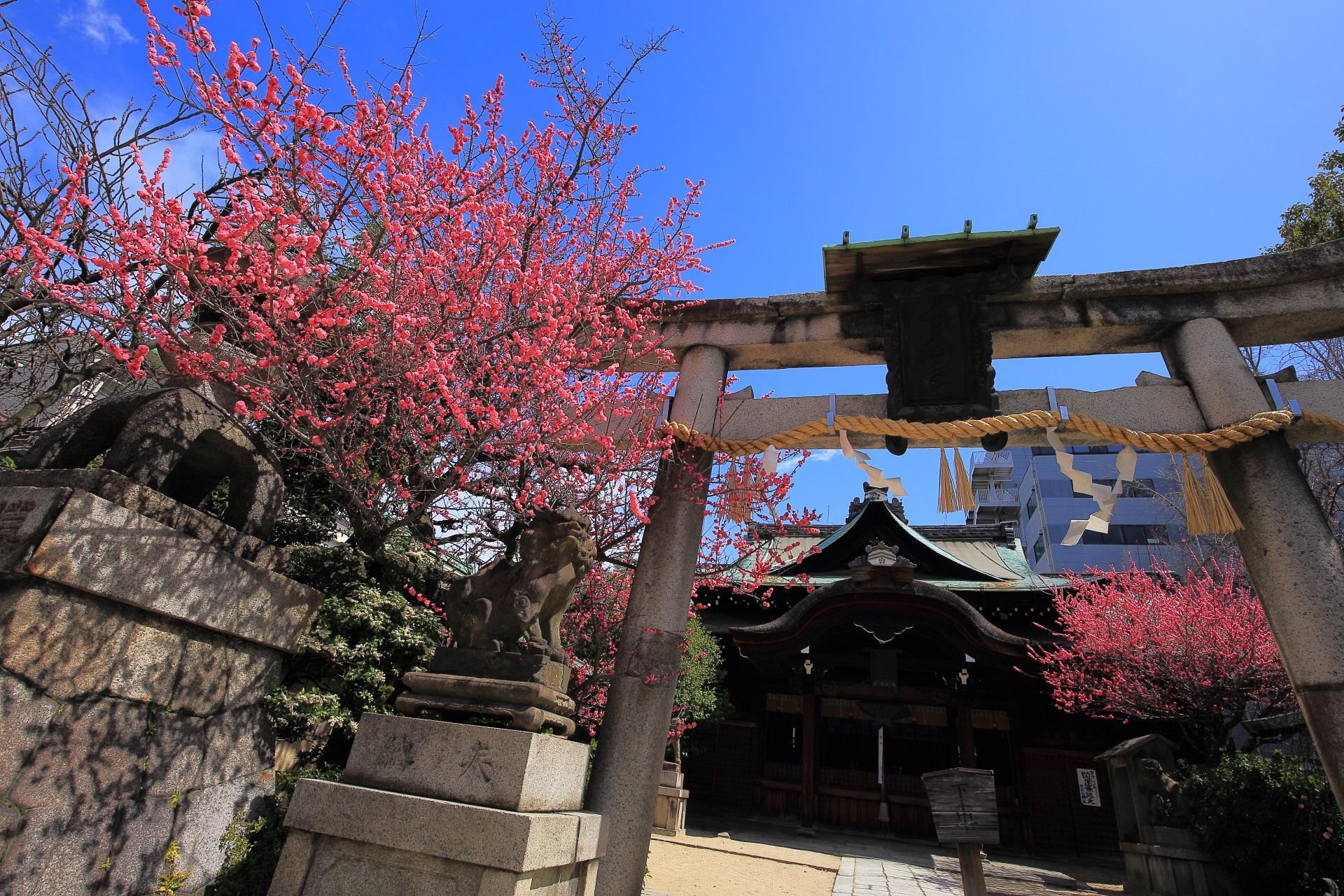 菅大臣神社 梅 由緒ある街中の梅の名所