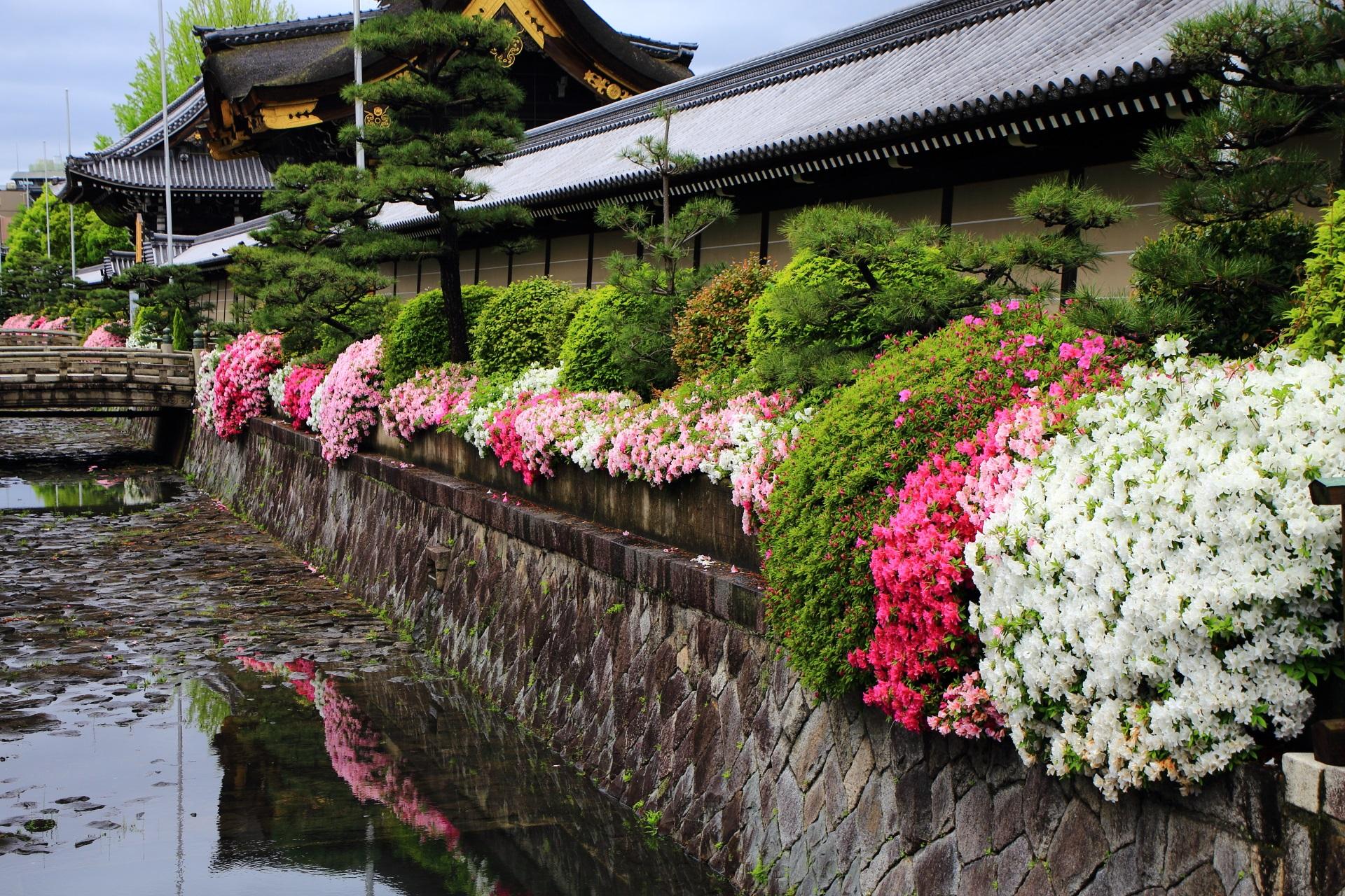 西本願寺の境内東側のお堀沿いに植えられるツツジ