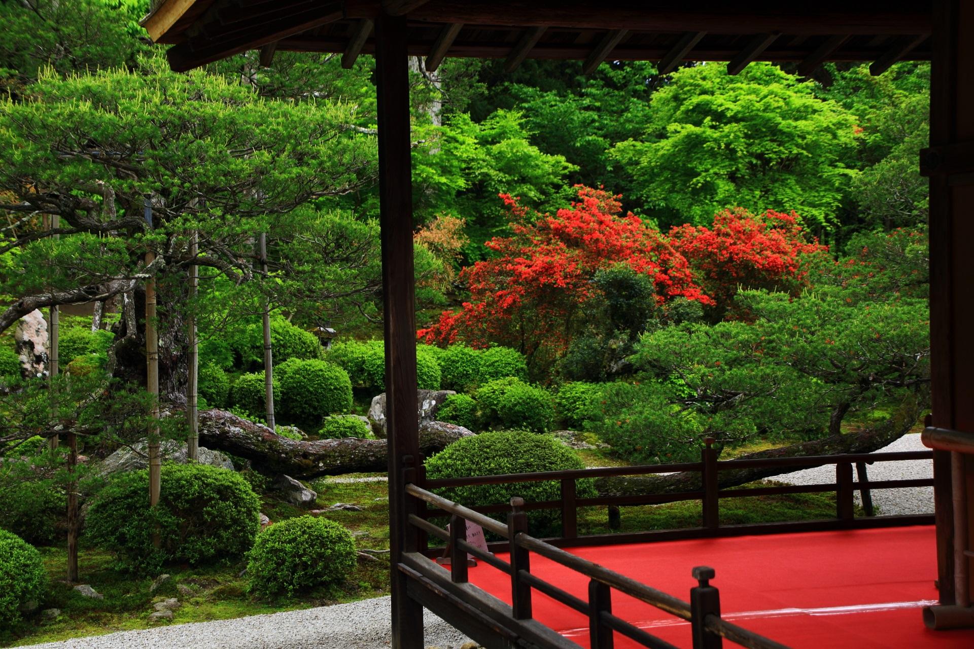 松や新緑や刈り込みなどの深い緑の中で煌く赤いツツジ
