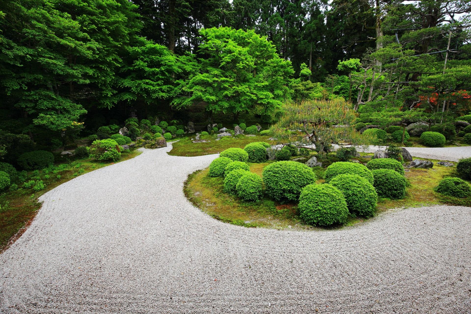 小書院南側に広がる白砂と緑の曼殊院の枯山水庭園