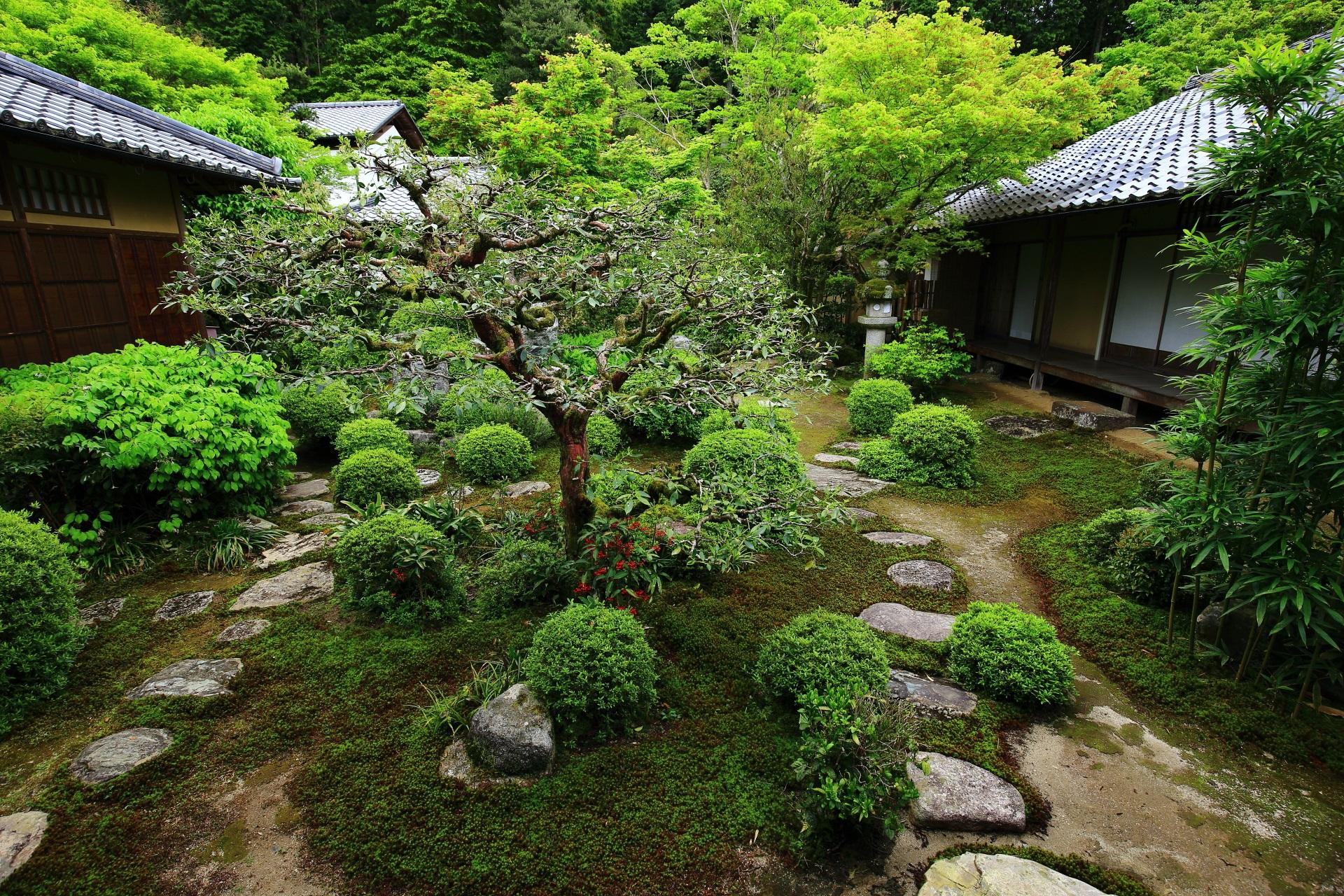 多種多様な植物が植えられる緑溢れる曼殊院の書院の中庭