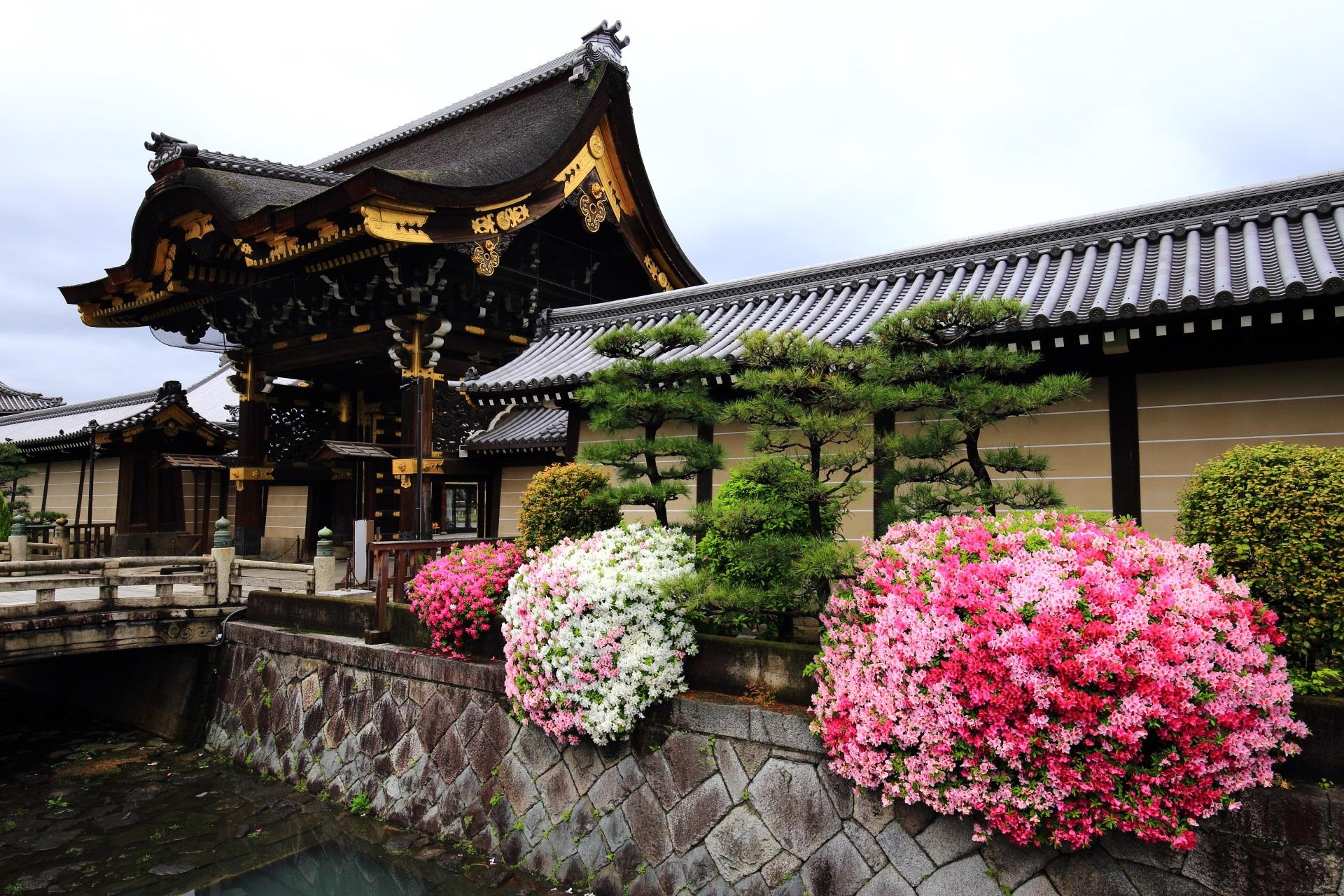 雄大な阿弥陀堂門を彩る鮮やかなツツジ