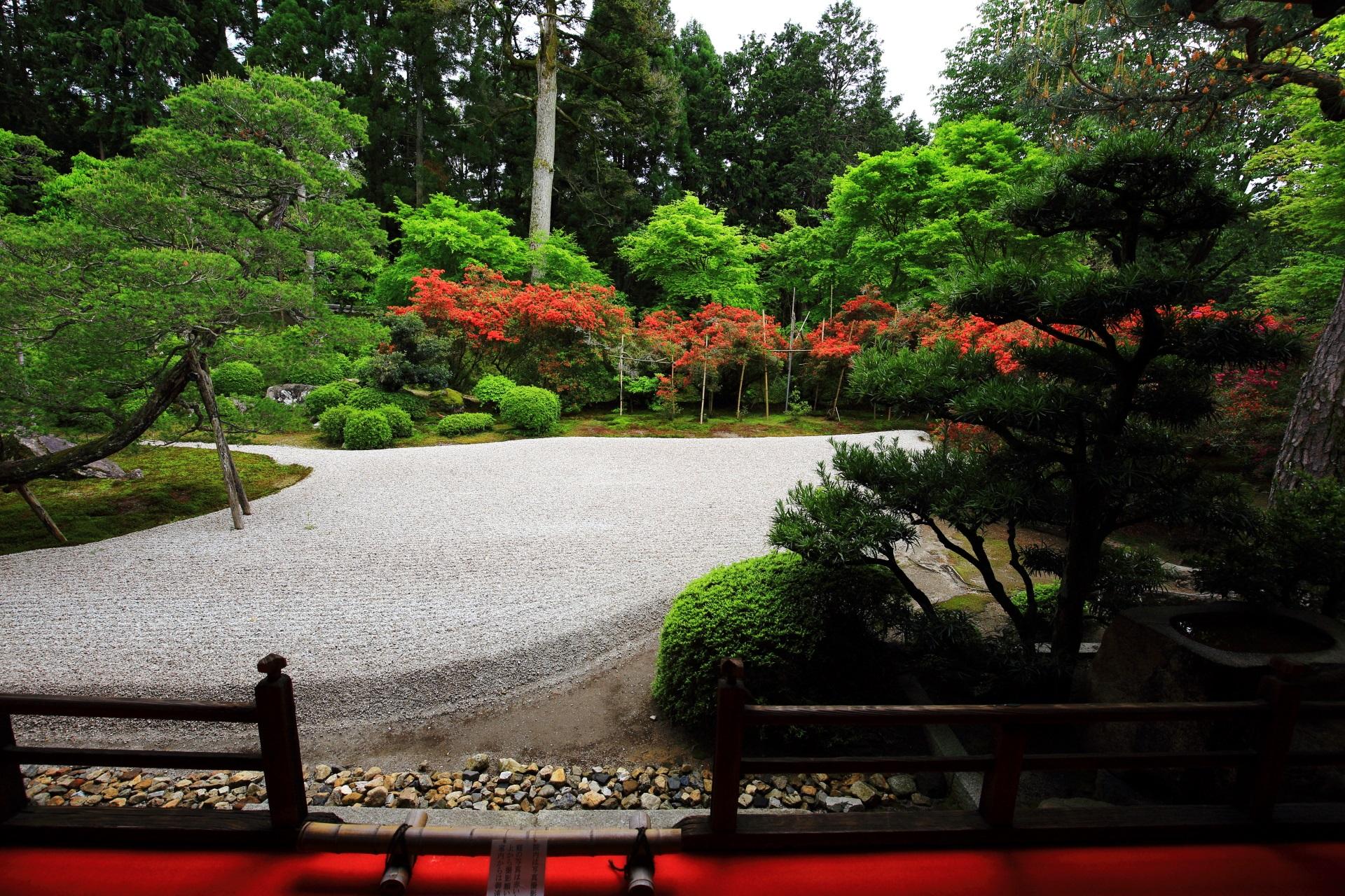 緑と赤につつまれる曼殊院の上品な白砂の枯山水庭園