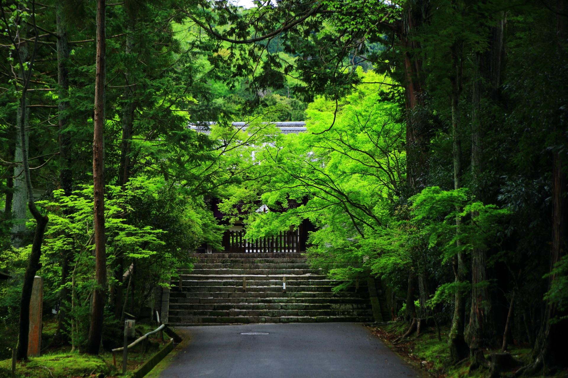 自然につつまれる曼殊院の勅使門をそめる眩い緑