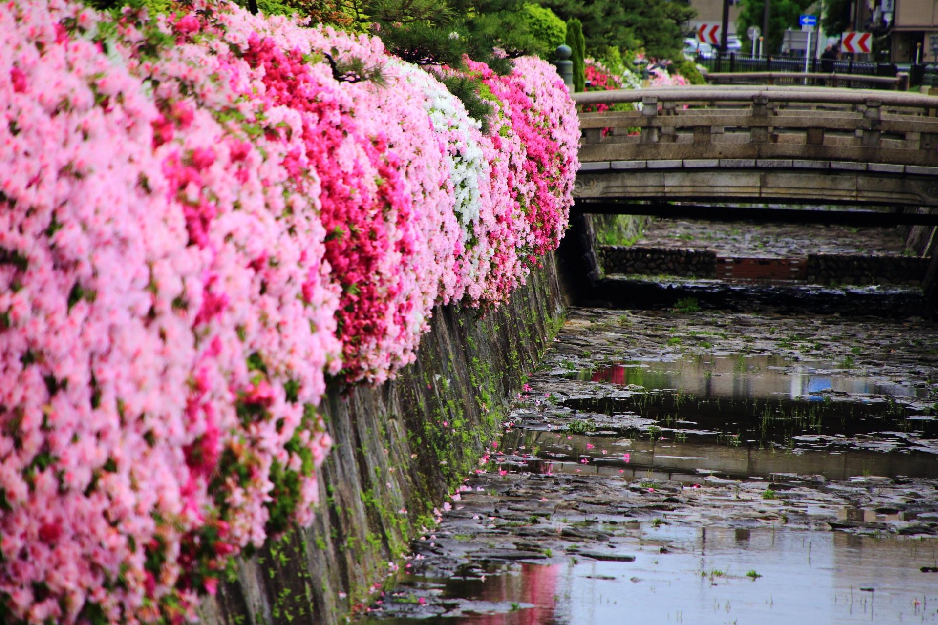 西本願寺の満開のツツジにつつまれる風情ある石橋