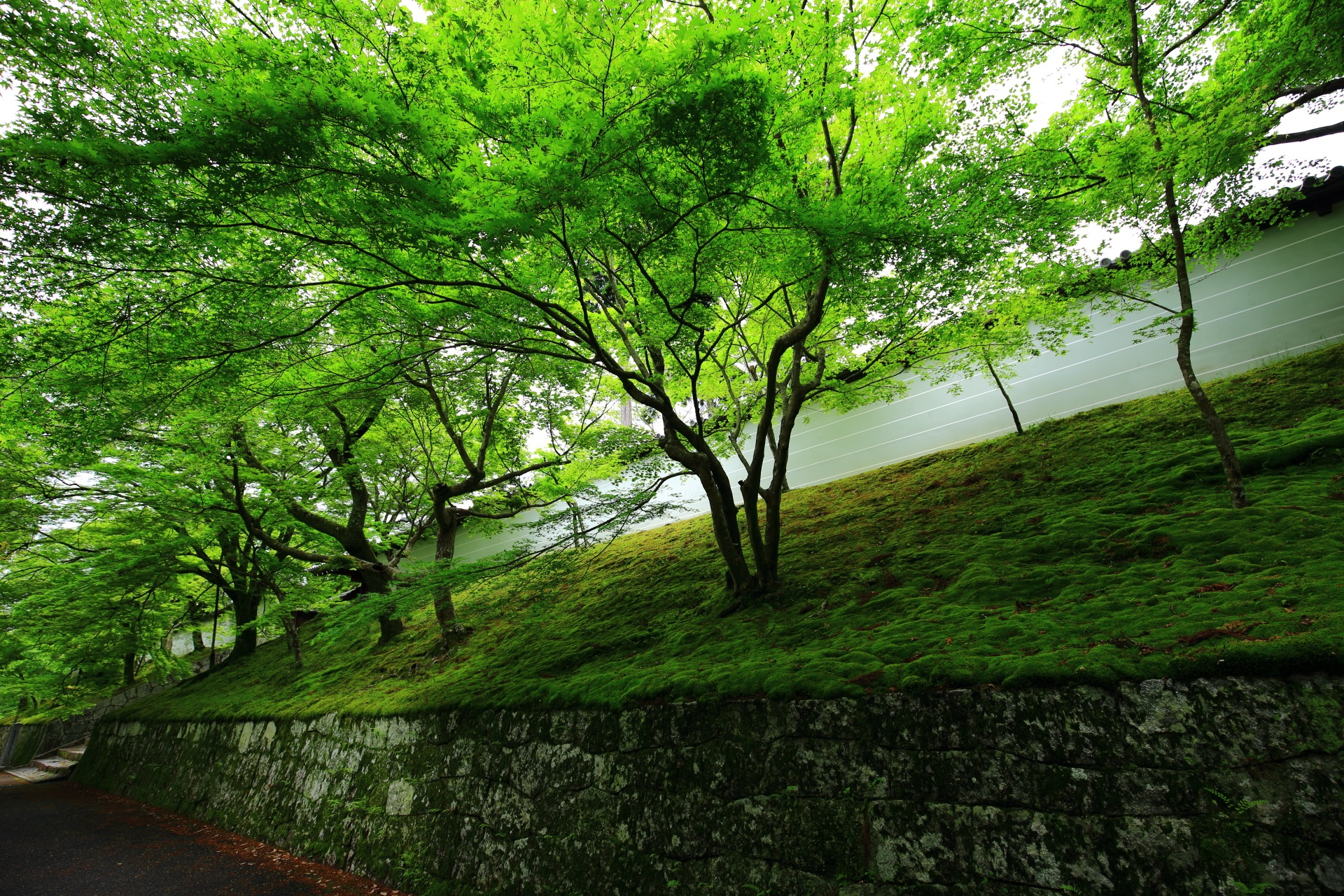 淡い緑の苔と青もみじにつつまれる春の曼殊院
