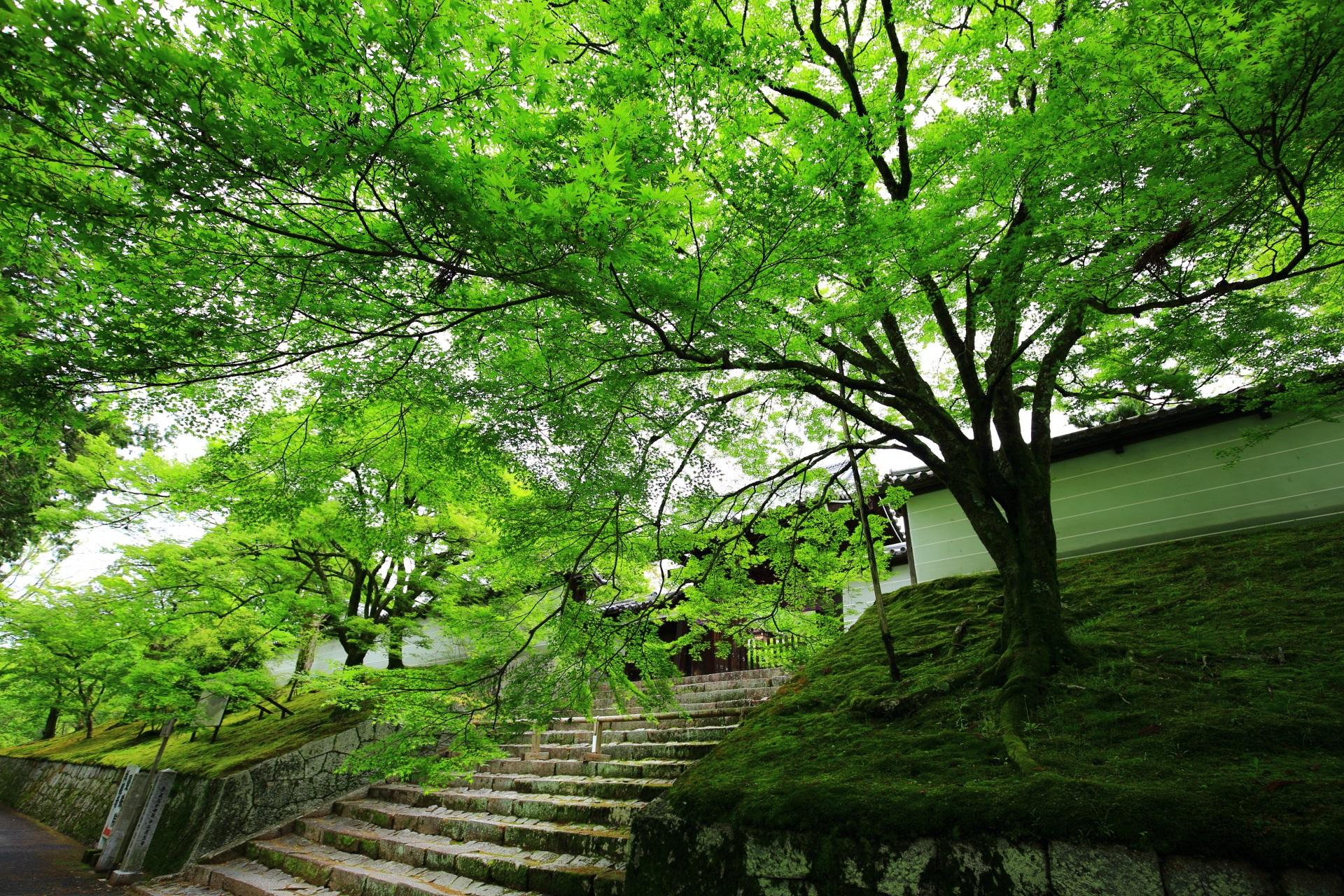 曼殊院の広がる新緑と苔の優しい緑の空間
