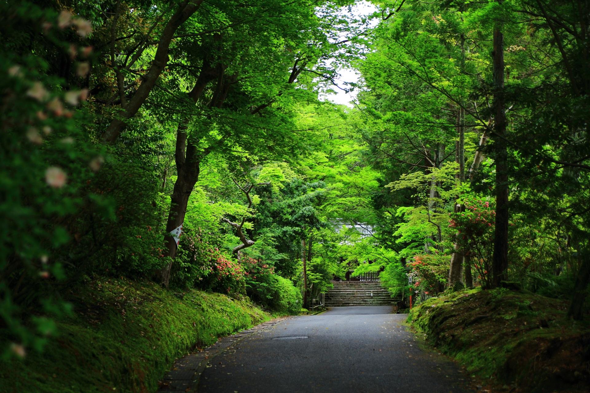 勅使門前の長い参道の美しい新緑や青もみじ