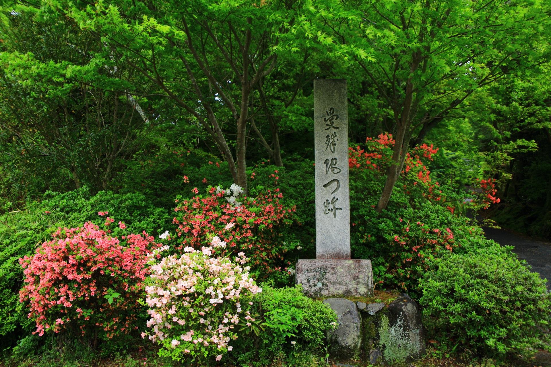 華やかなツツジと深い緑につつまれた「曼殊院門跡」の石碑