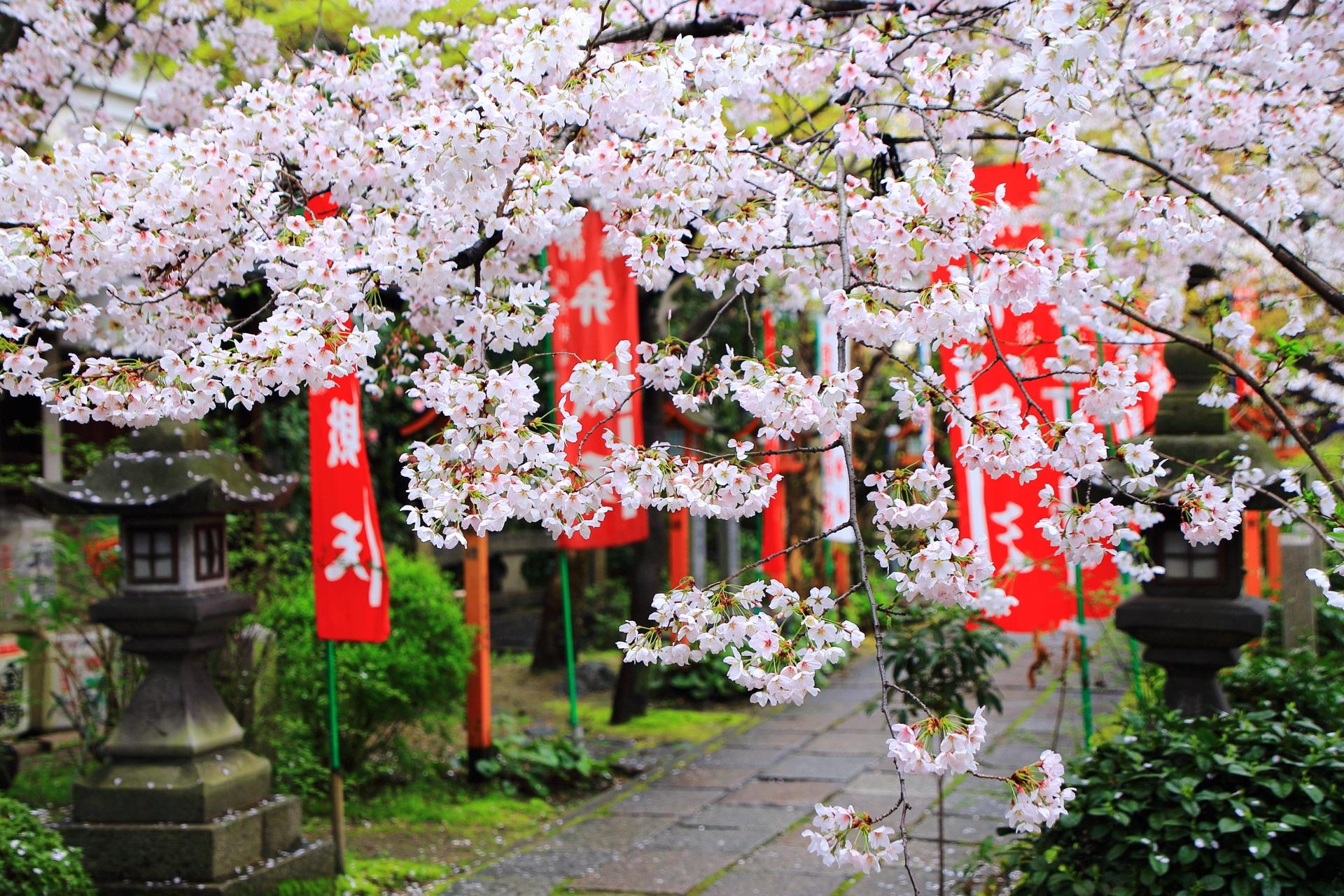 長建寺 桜 酒蔵の街の華やかな桜の名所