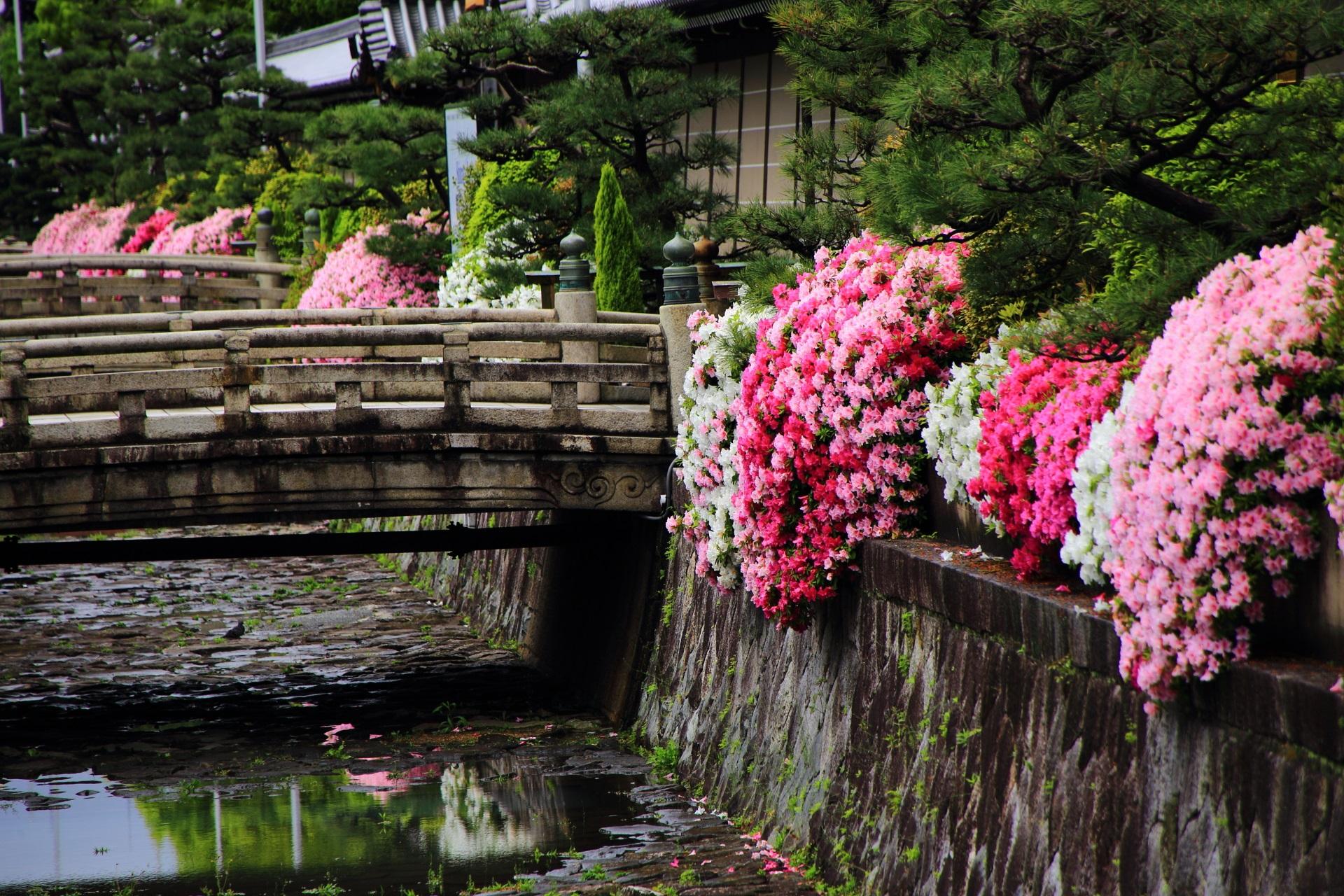 美しいツツジを演出するお堀に架かる石橋