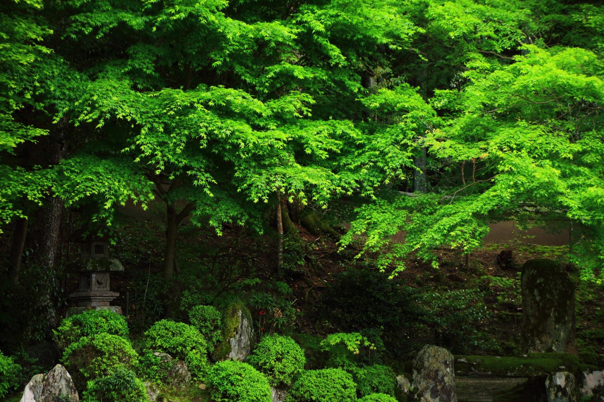 優雅な緑につつまれる蟷螂や力強い岩