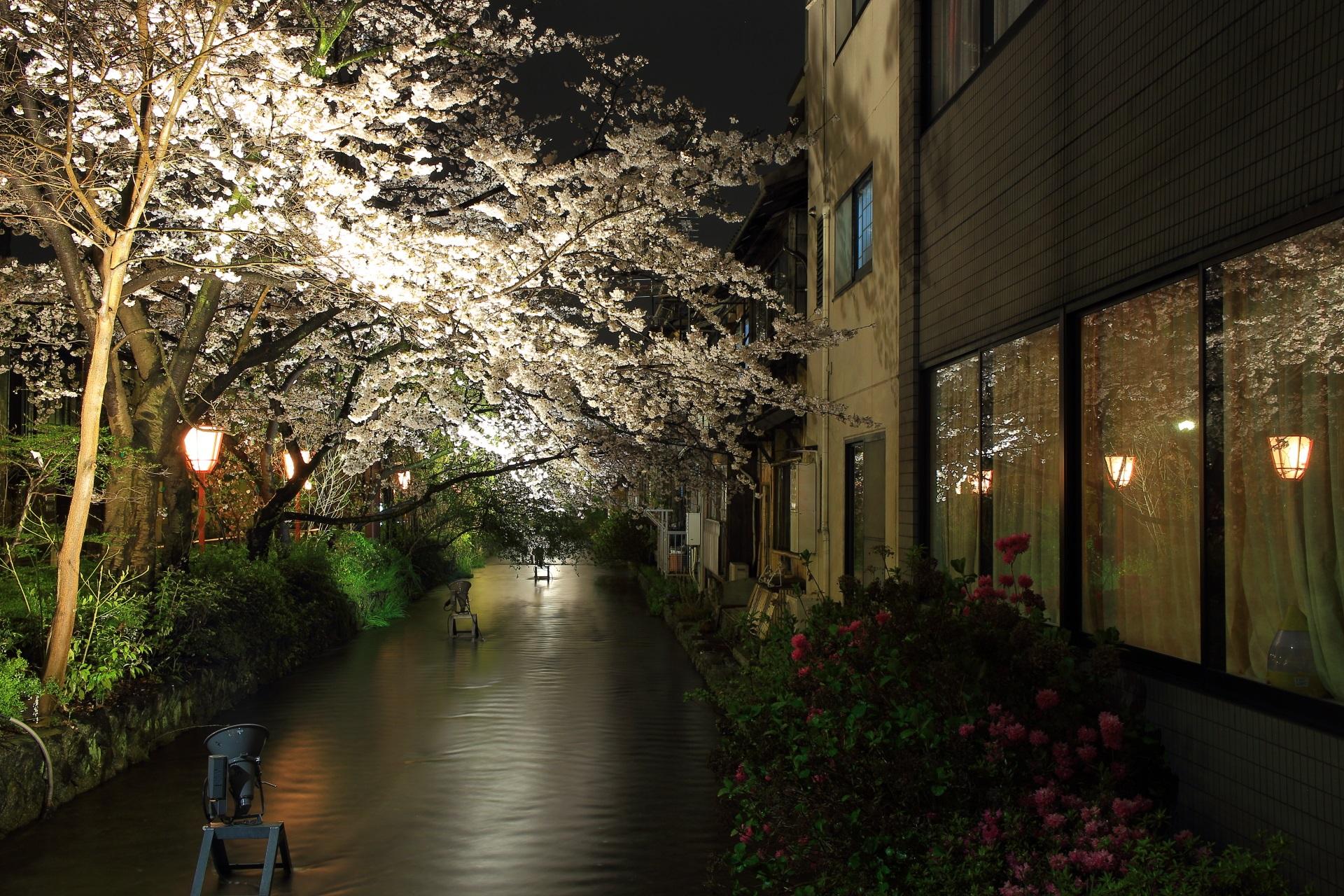 高瀬川と木屋町通の夜桜