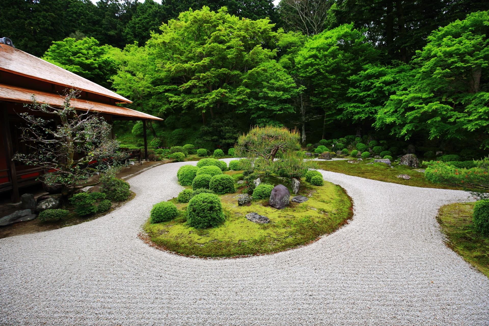 曼殊院 新緑と青もみじ 白砂の庭園を彩る鮮やかな緑