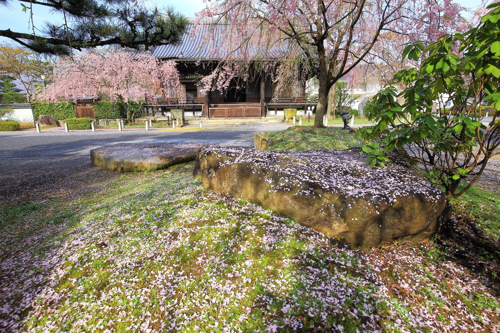 静かな散り桜としだれ桜