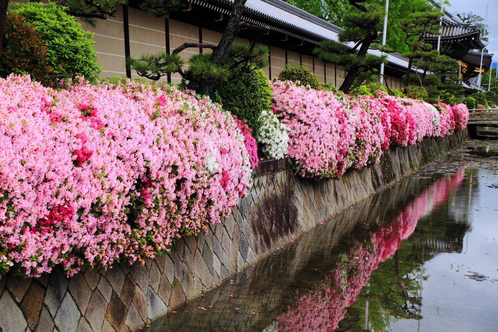 西本願寺 つつじ 色とりどりの春の彩りと水鏡