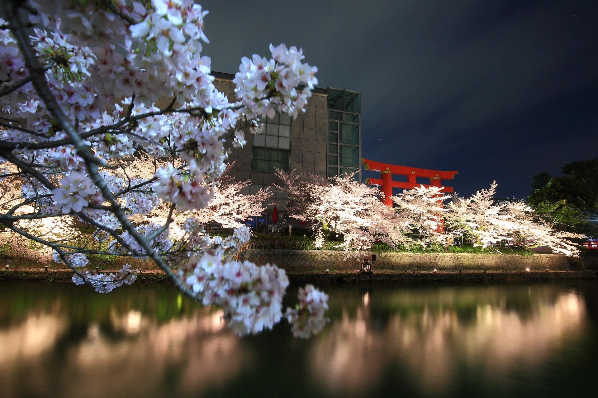 岡崎疏水の夜桜