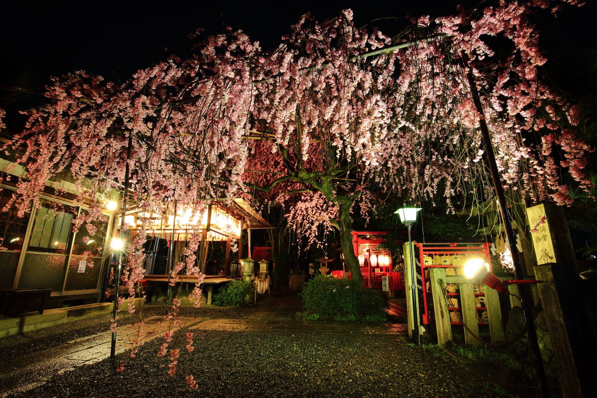 水火天満宮の夜桜