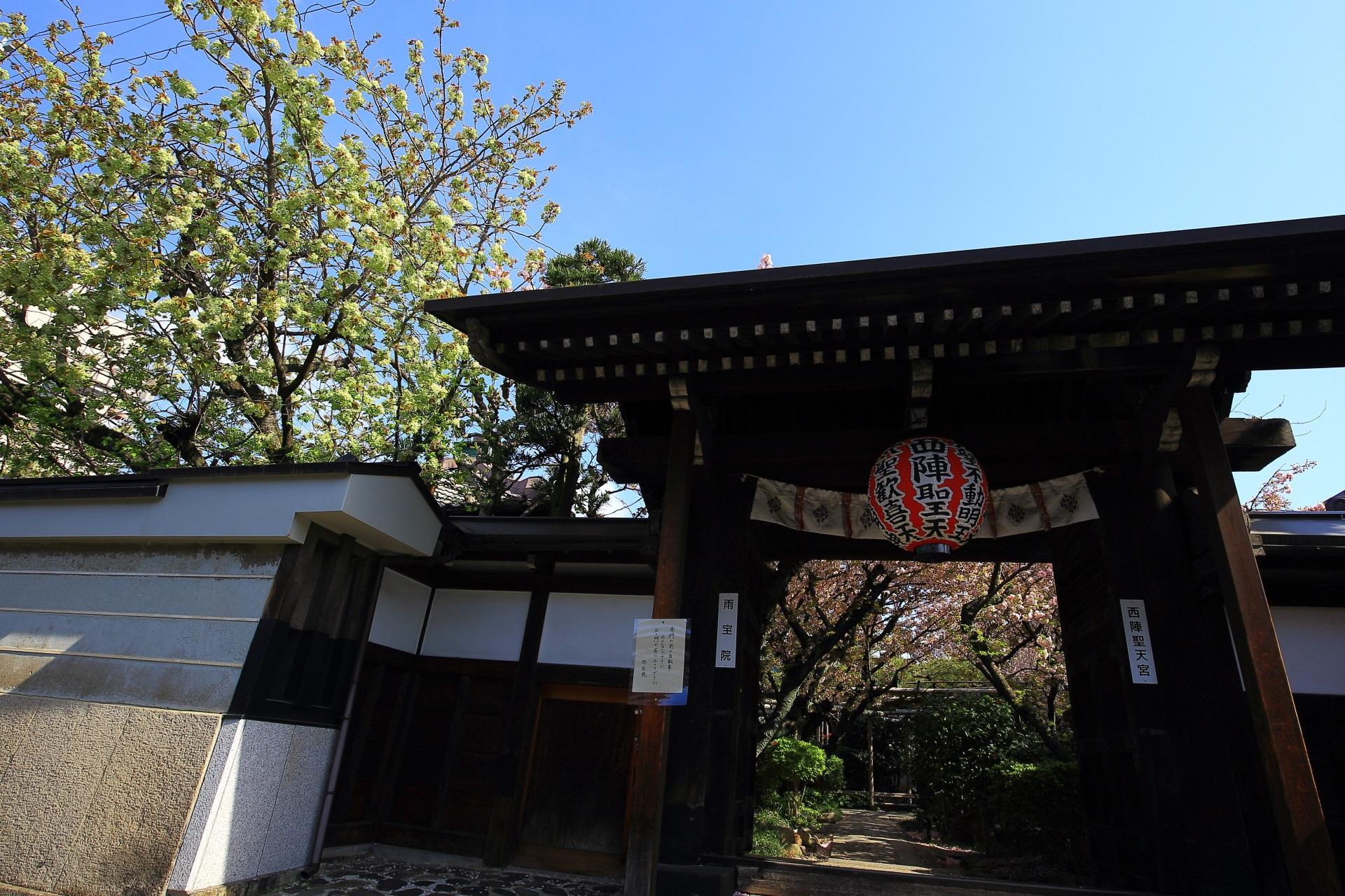 雨宝院 緑の桜と八重桜 遅咲きの桜につつまれる名所