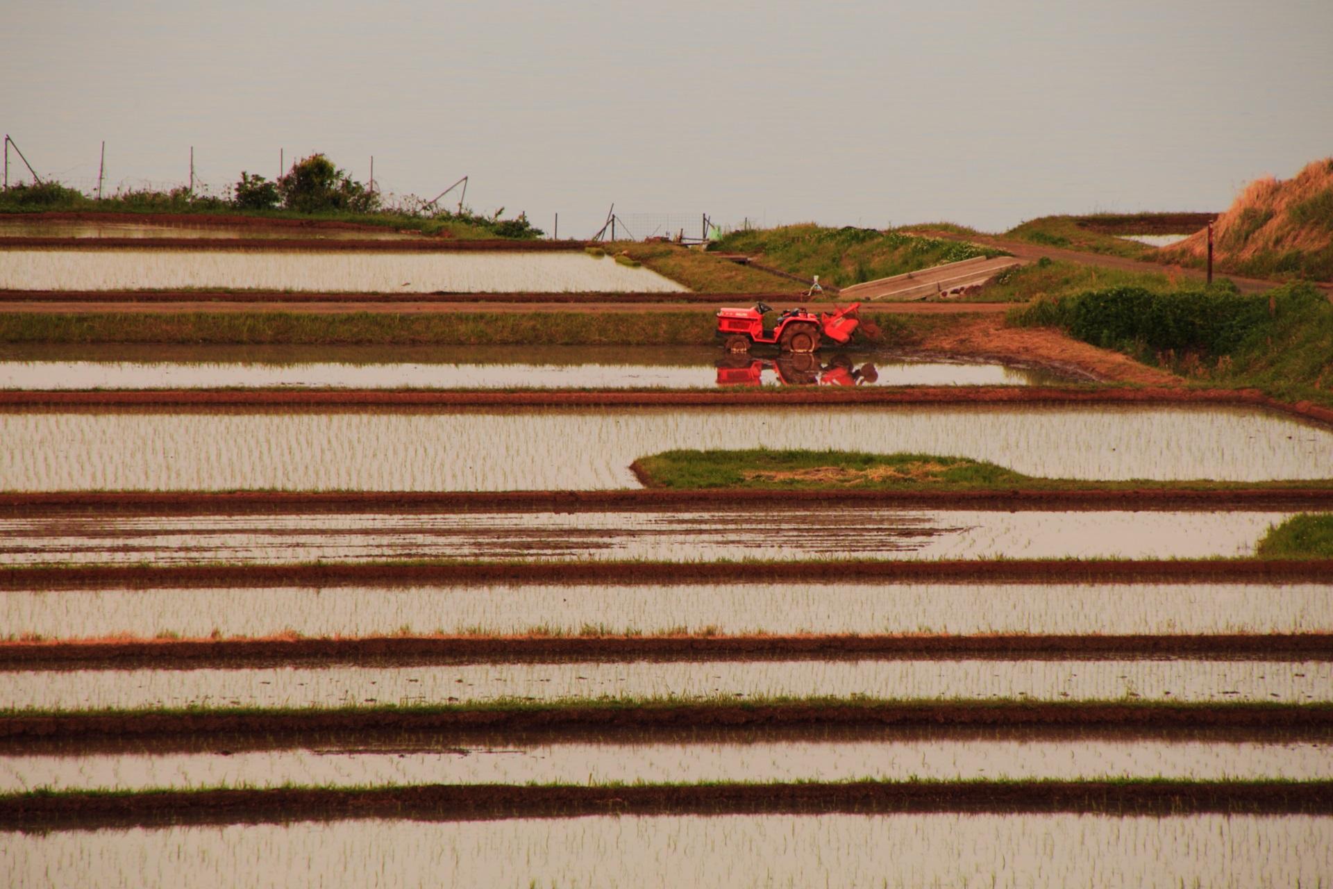 何とも味のある夕陽を浴びて田んぼに佇むトラクター