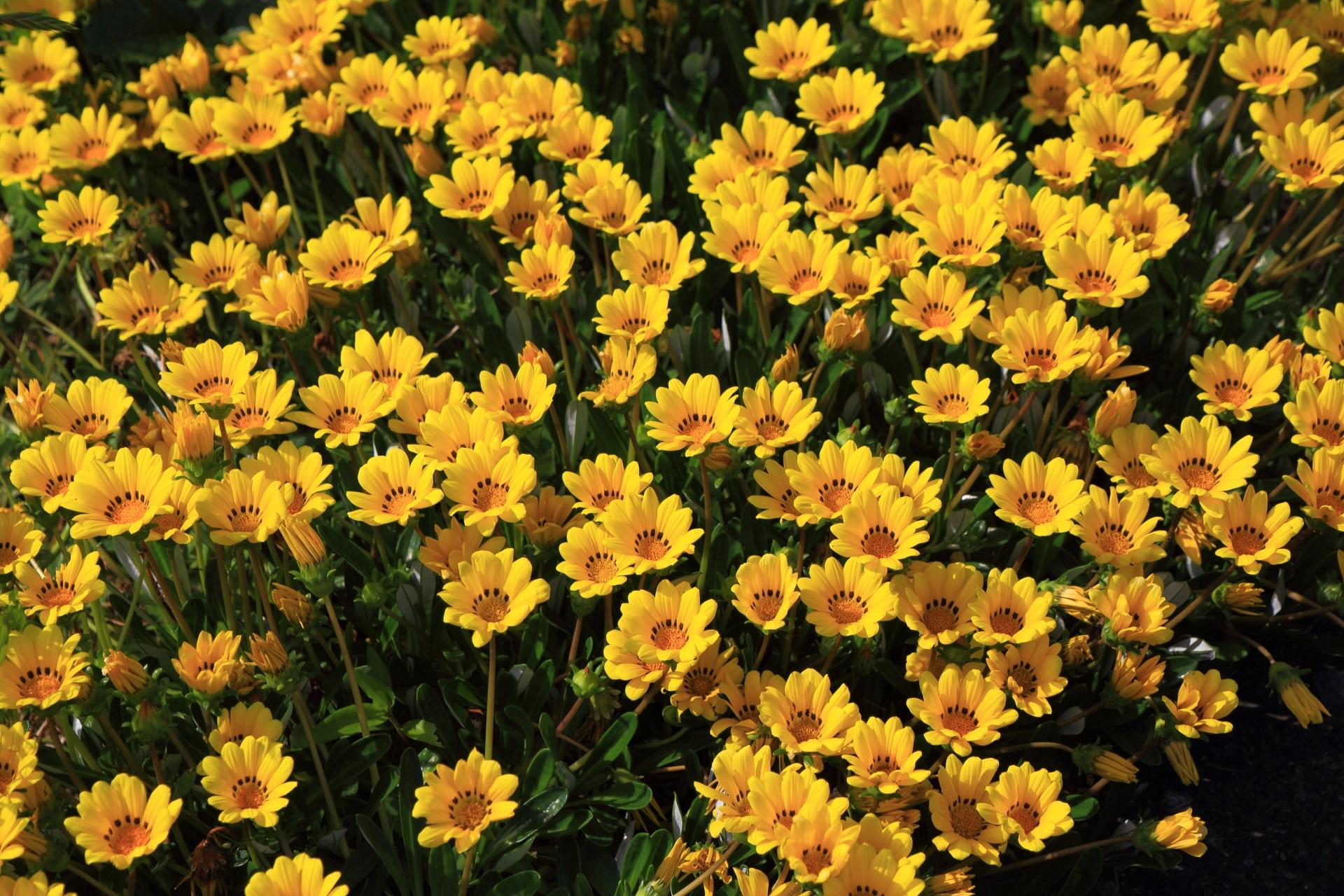 新井の棚田近くに咲く綺麗な花