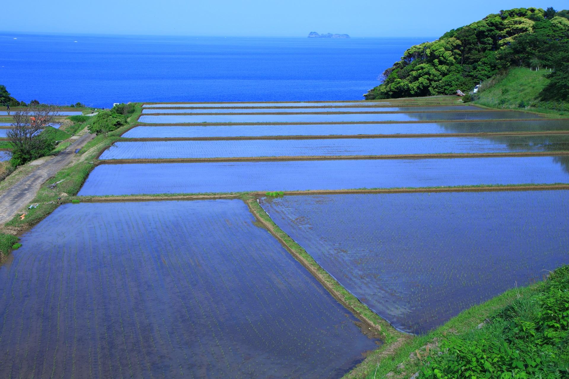 青い海へと繋がっていくような水を張った新井の棚田