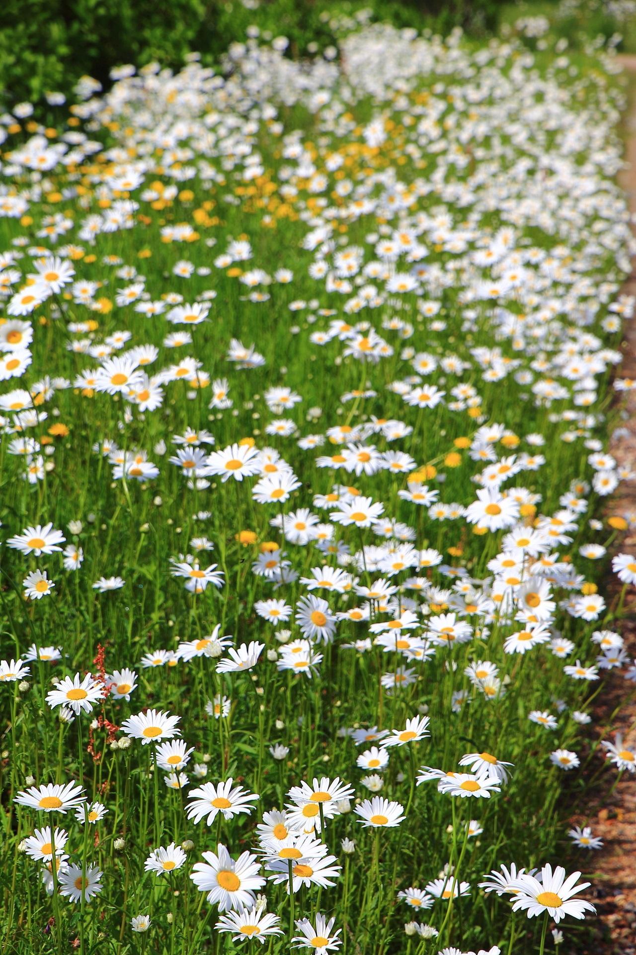 田園を彩る春爛漫の華やかな風景