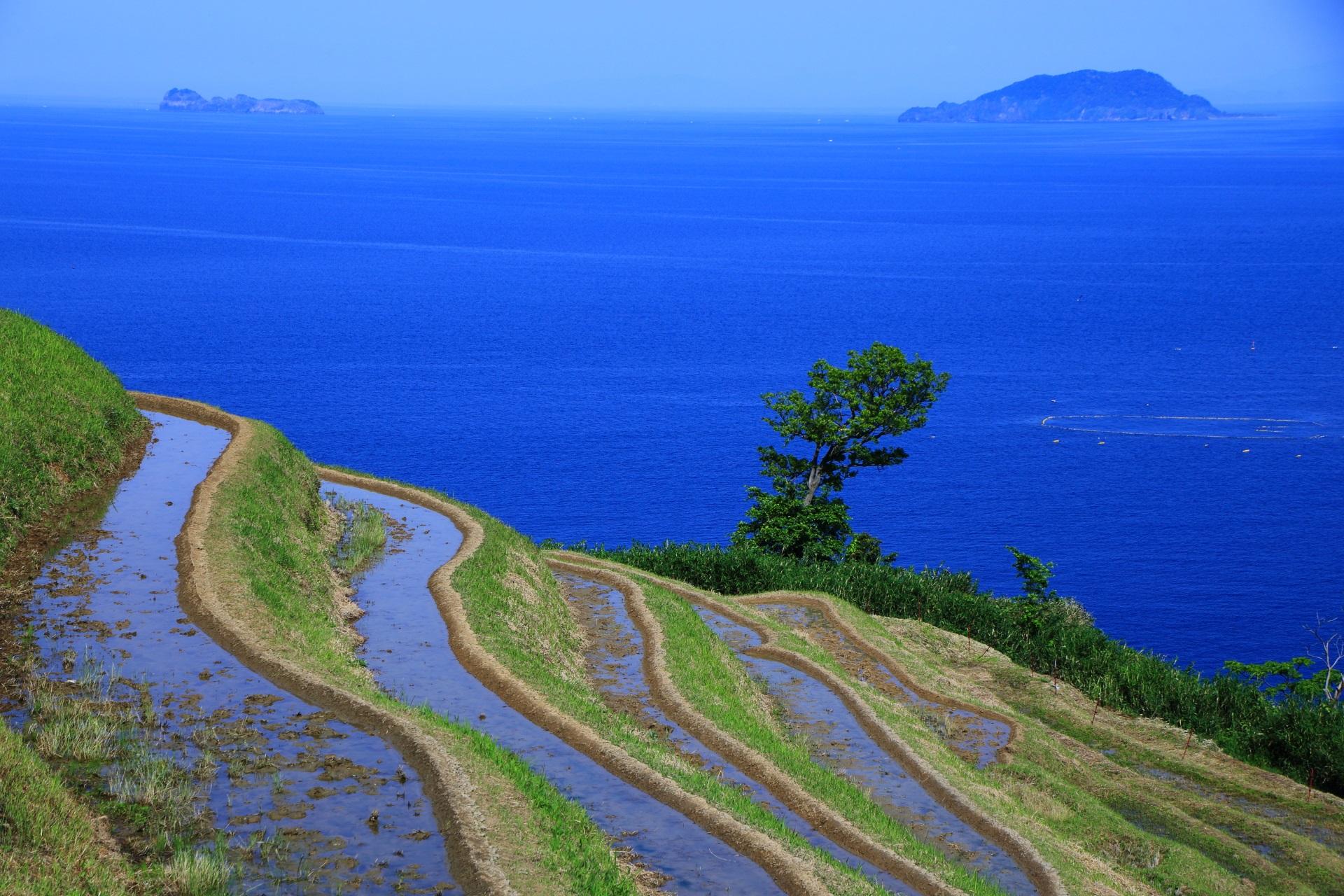 曲線を描く棚田の向こうに見える青い日本海と沓島(くつじま)と冠島(かんむりじま)