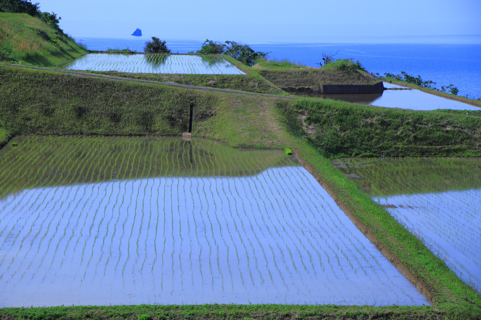稲が綺麗に植えられた空を映し出す新井の田んぼ