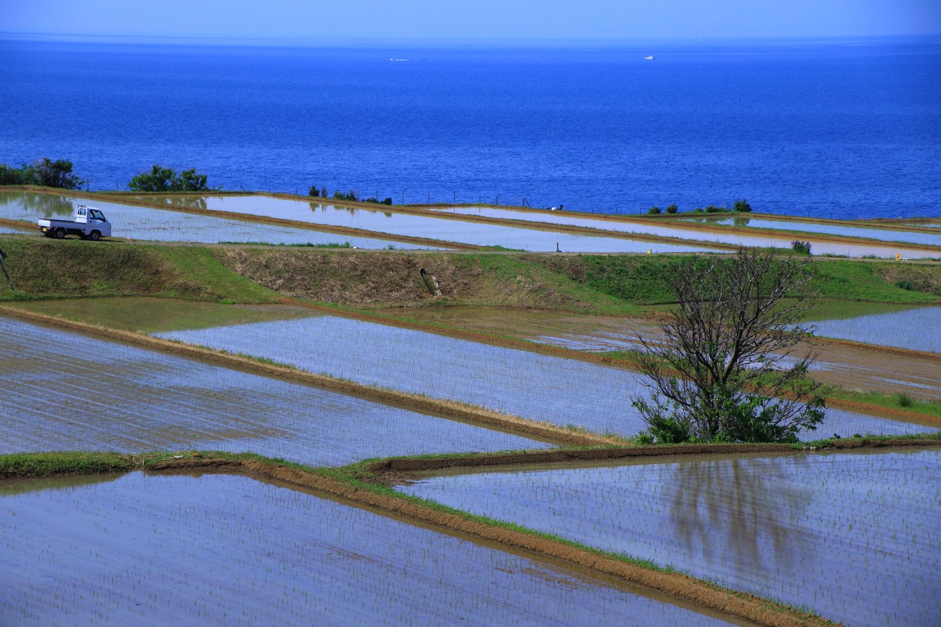 海辺に広がる独特の棚田の風景