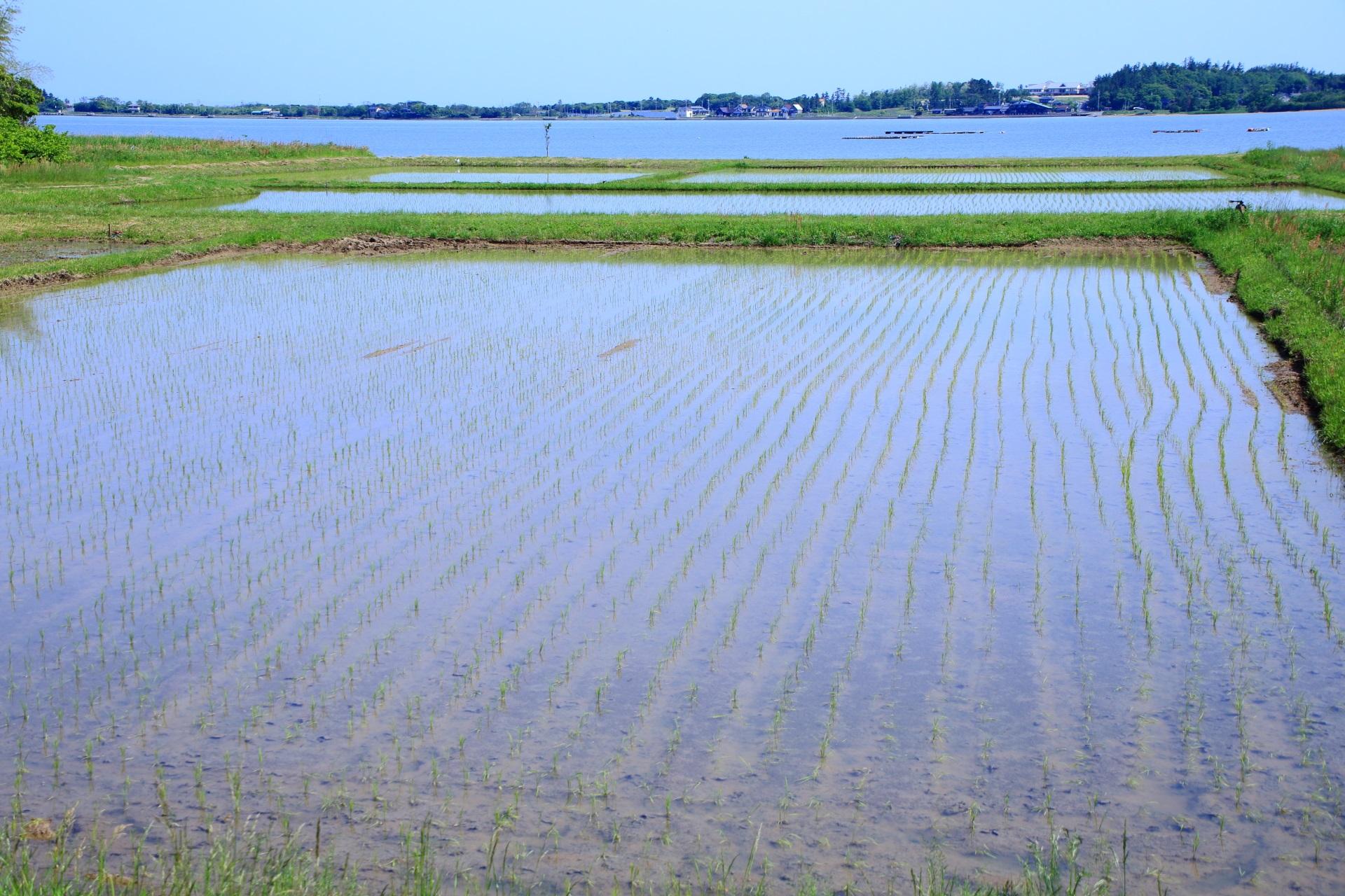 青空がほのかに映る水を張った田んぼと奥の久美浜湾