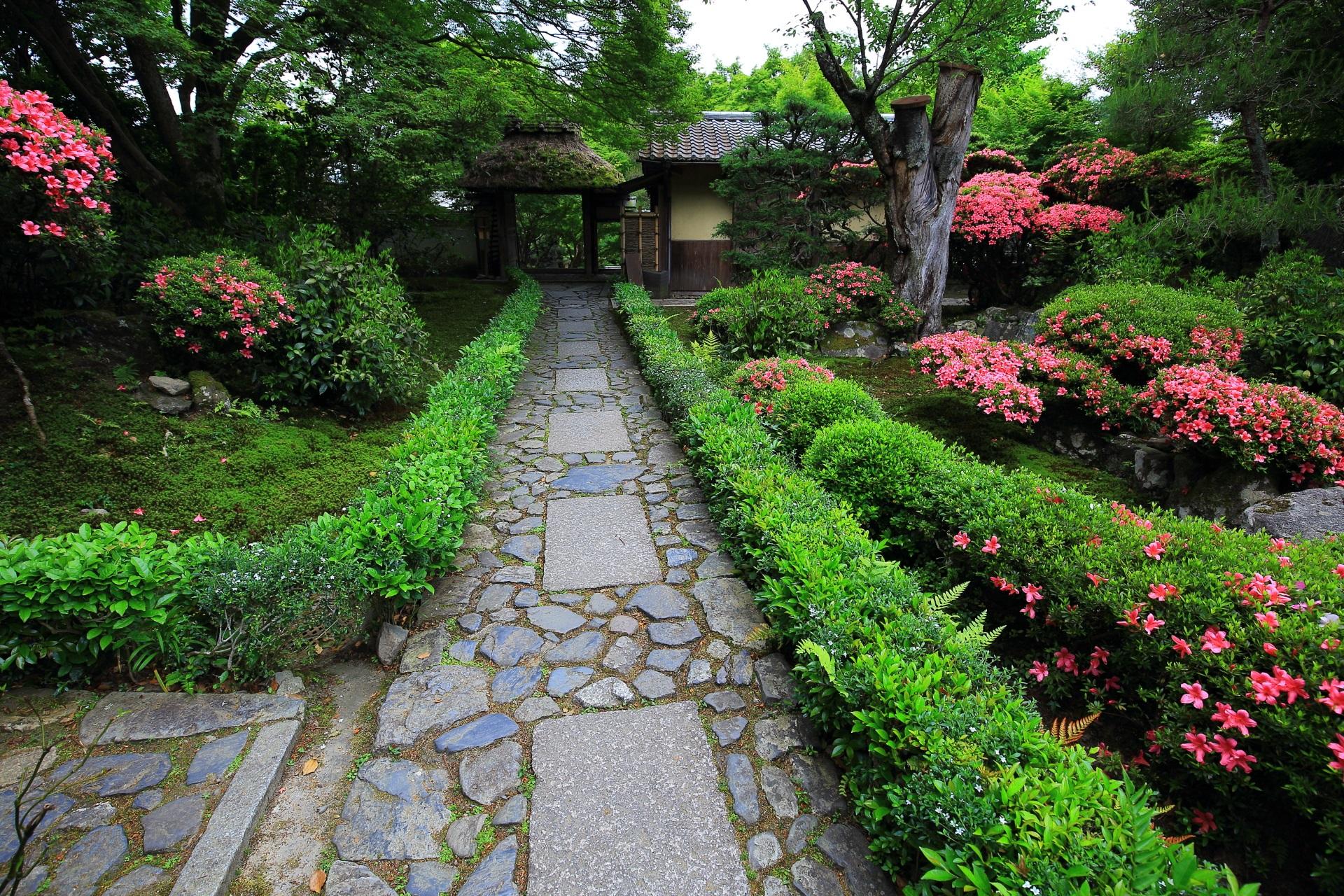 安楽寺 さつき 鮮やかなピンクと緑の春の彩り
